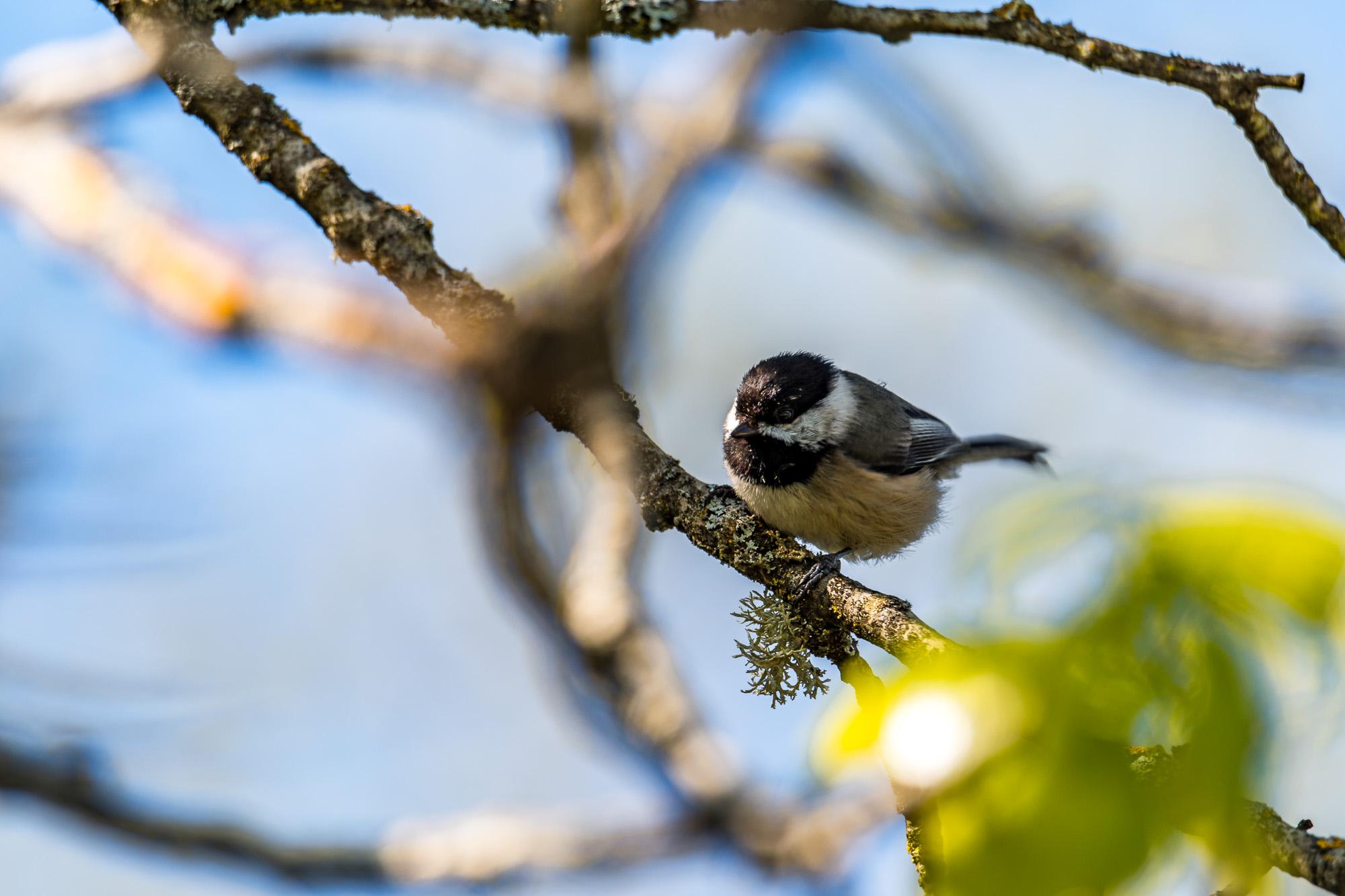Birds_2017-36.jpg