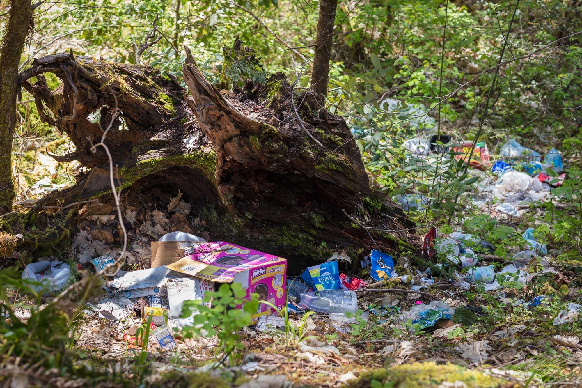 Picket Creek 05.jpg