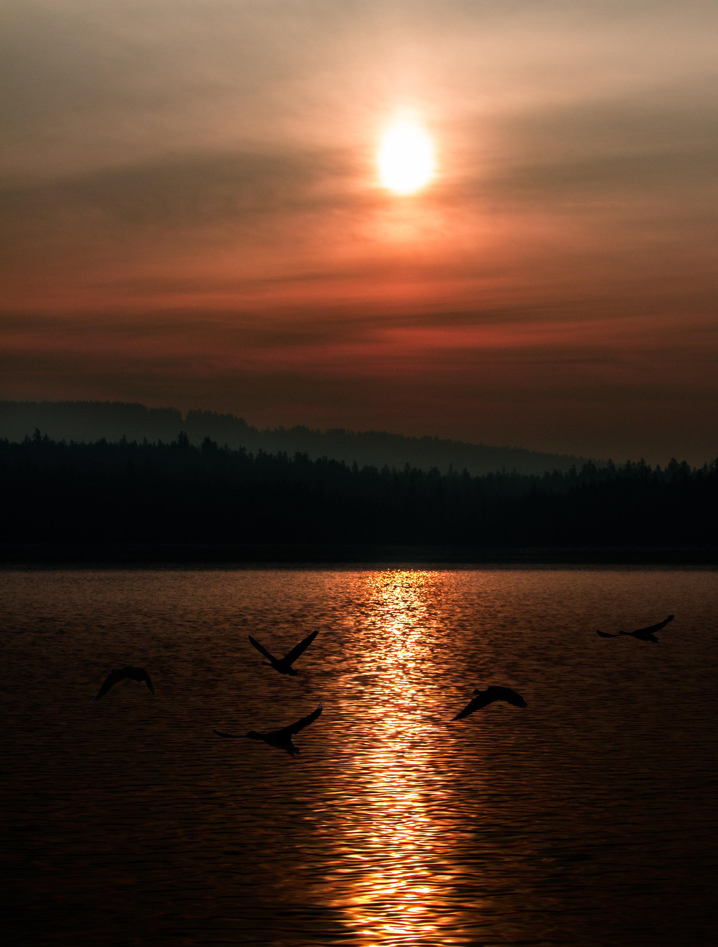Smokey Morning Fly By.jpg