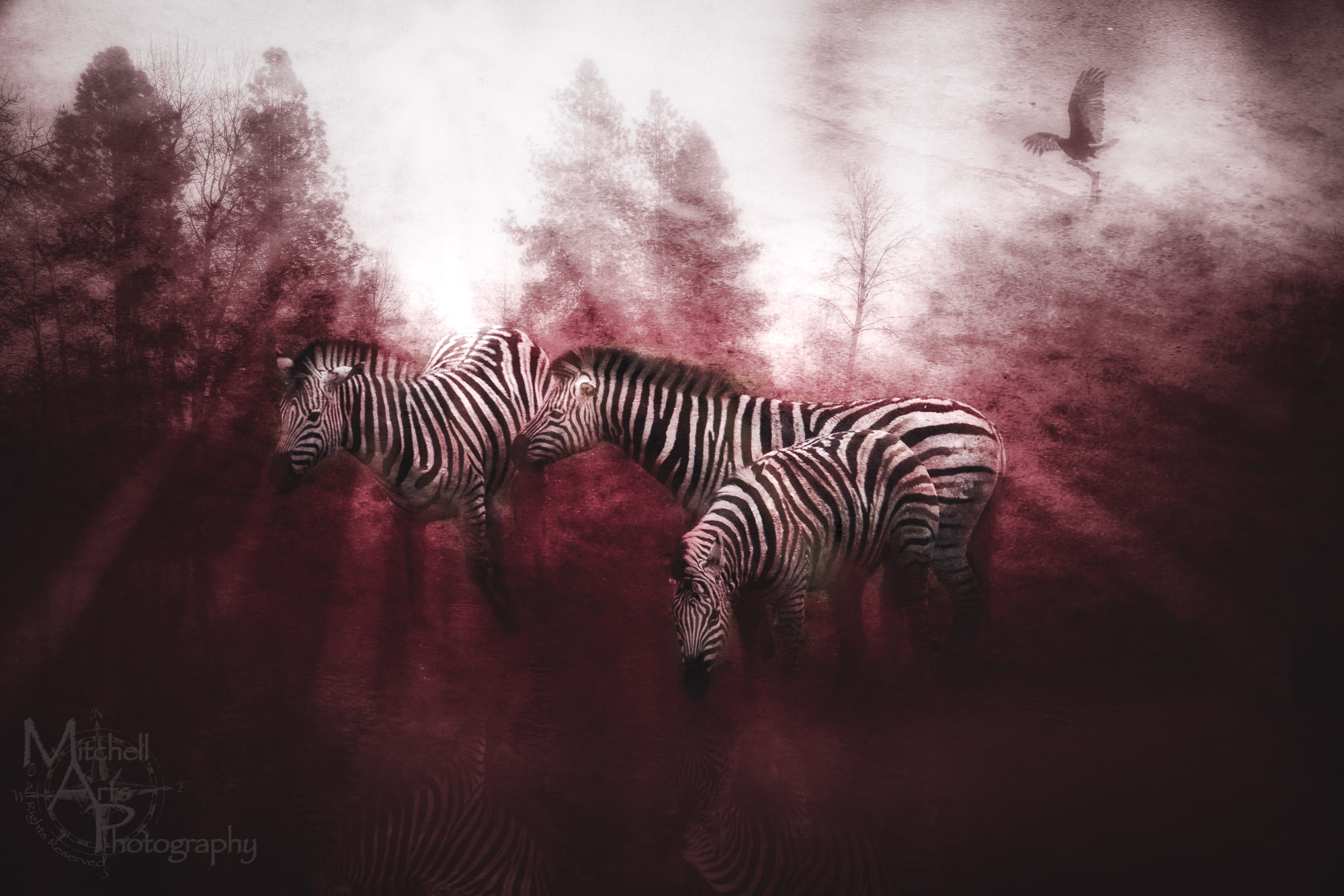 Surreal Zebra.jpg