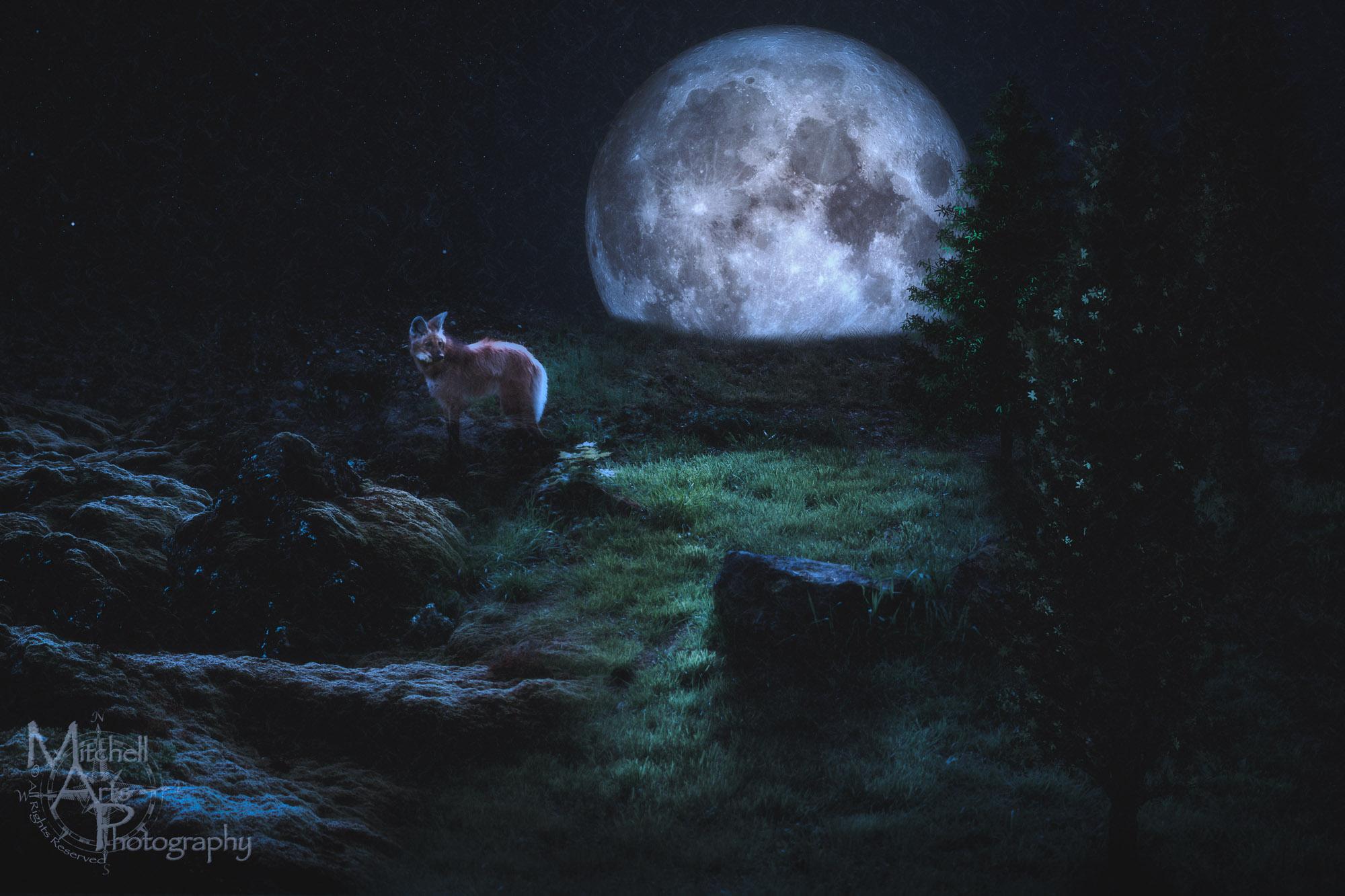 Surreal Maned Wolf.jpg