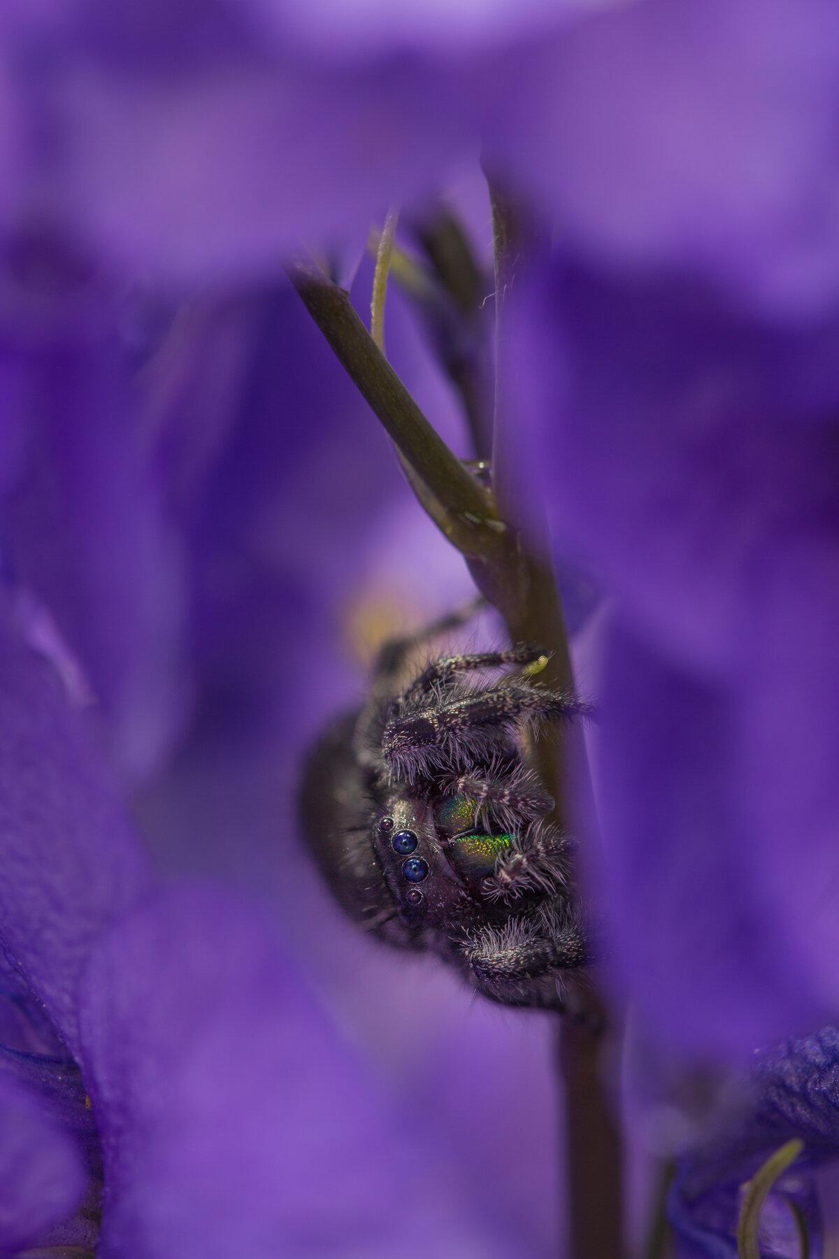 Hiding in Purple.jpg