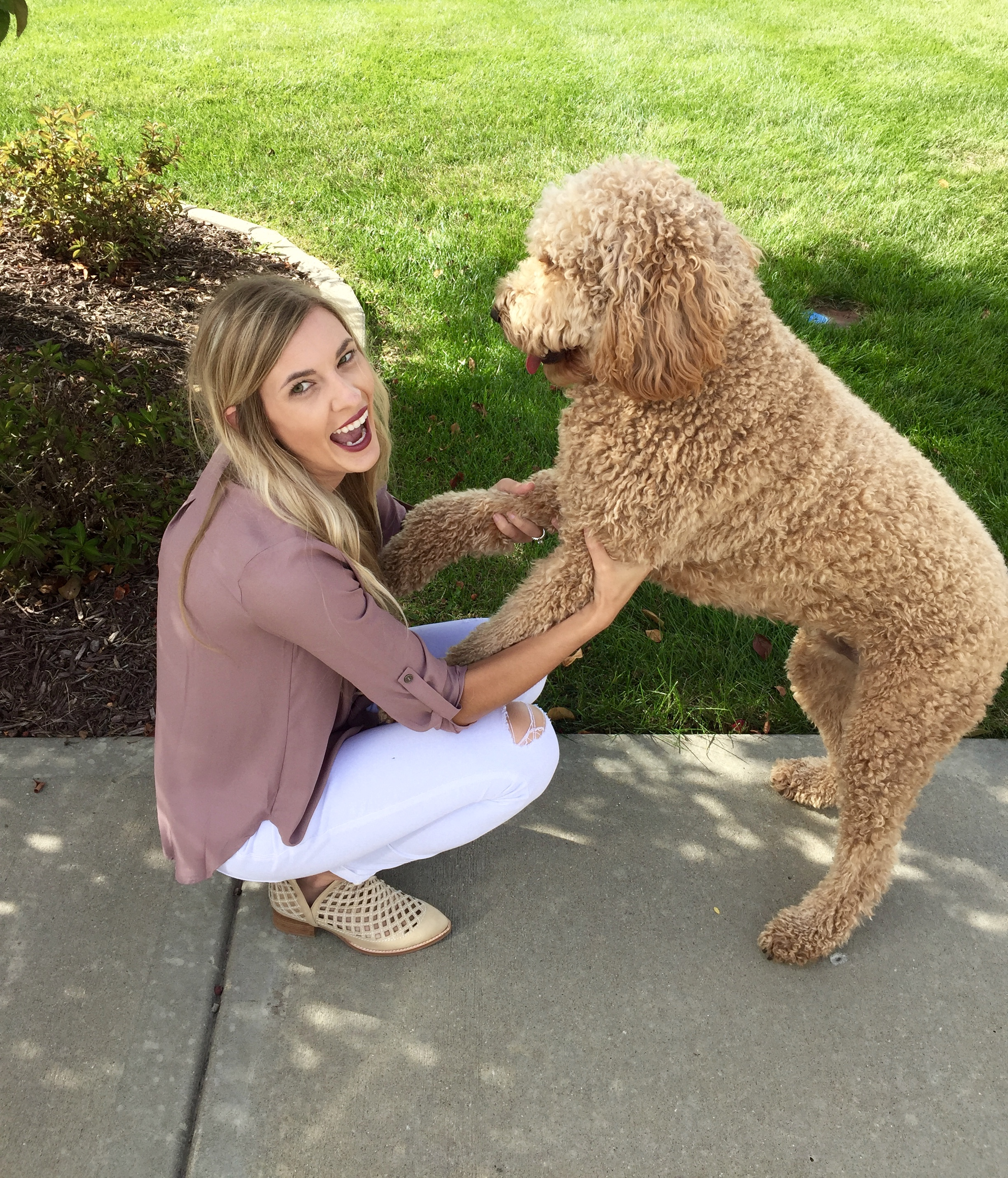 It's not always easy getting a 2 year old giant puppy to cooperate...