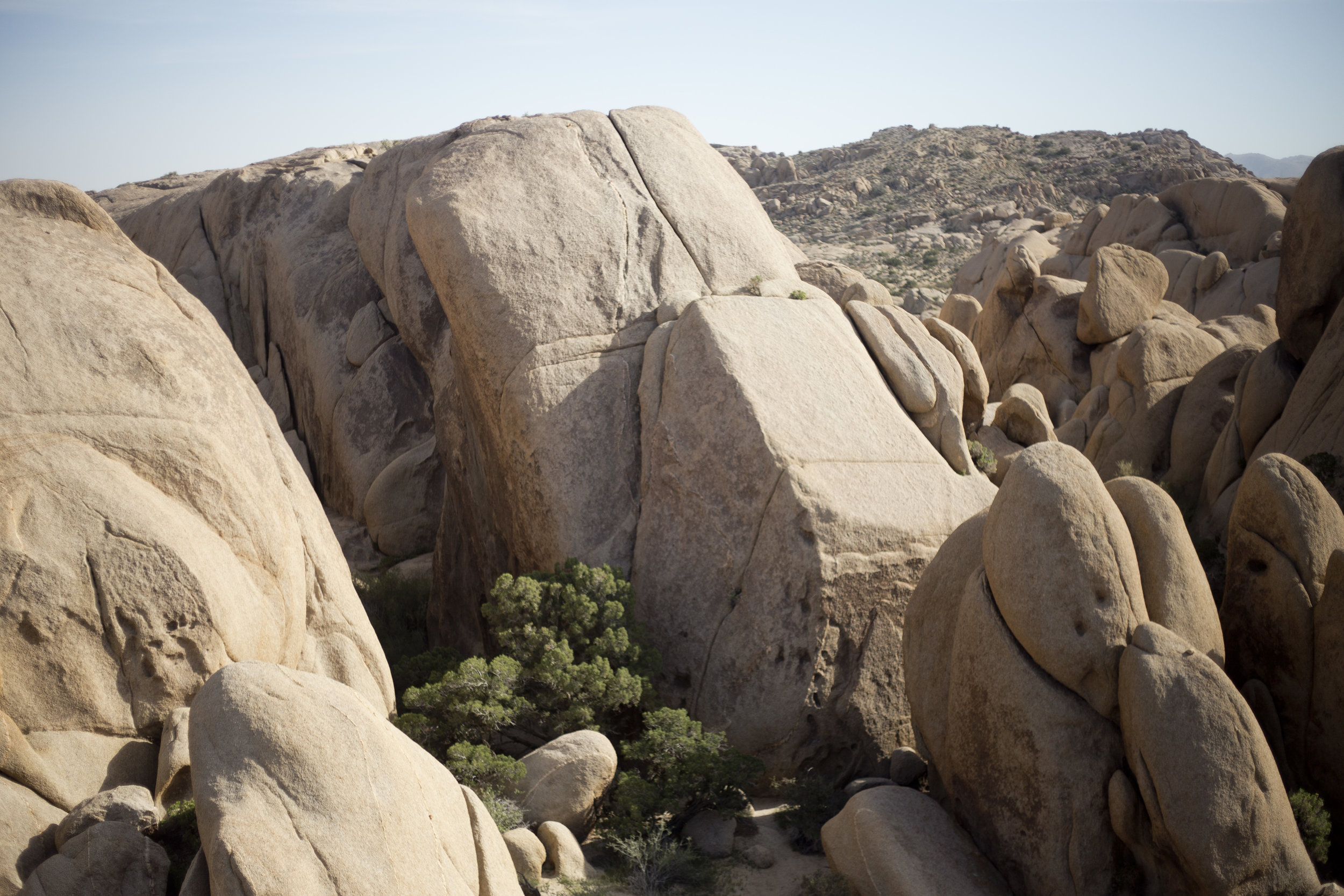 03.23.16_SB2016Day5JoshuaTree002.jpg