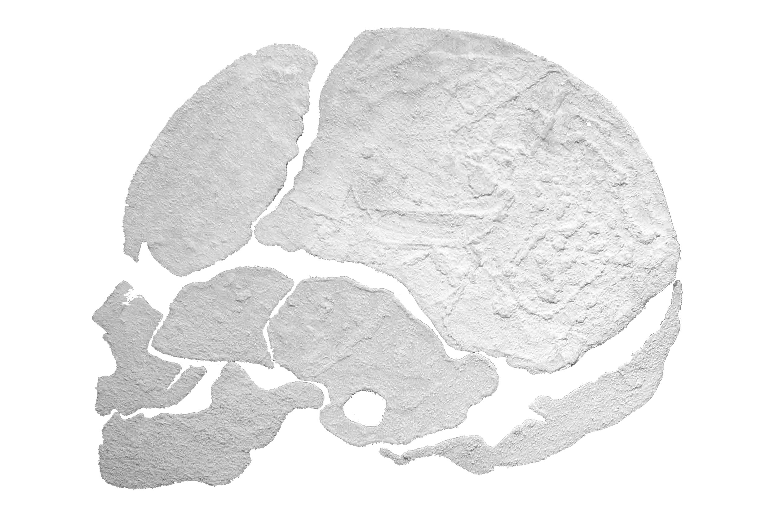 blankoneskull.jpg