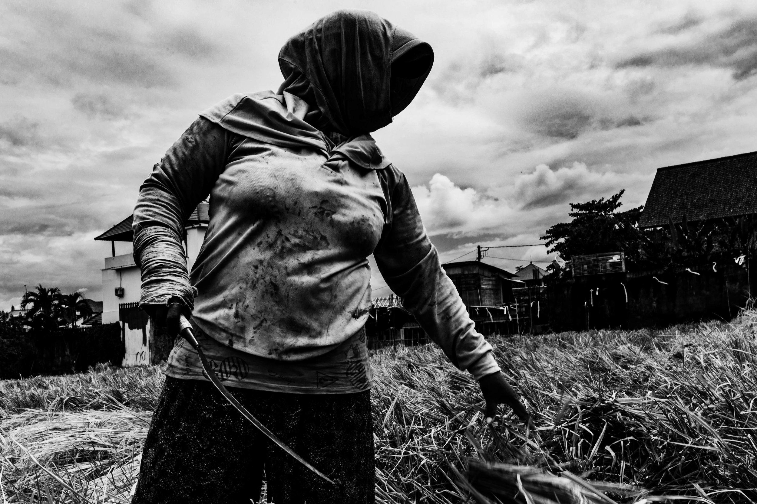 Rice farmer, Canggu - January 2018