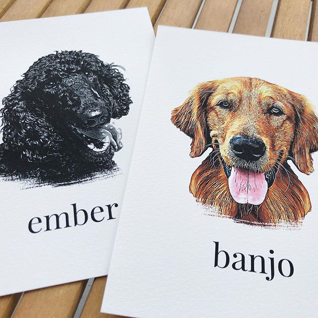 These cuties went out this week, and they are downright adorable! 🐶 🐶 #petportrait
