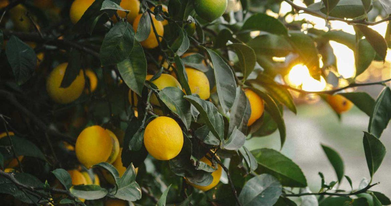 lemons-1170x617.jpg