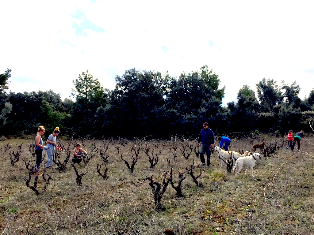Esme, Alta and Rayna helped us prune the vines