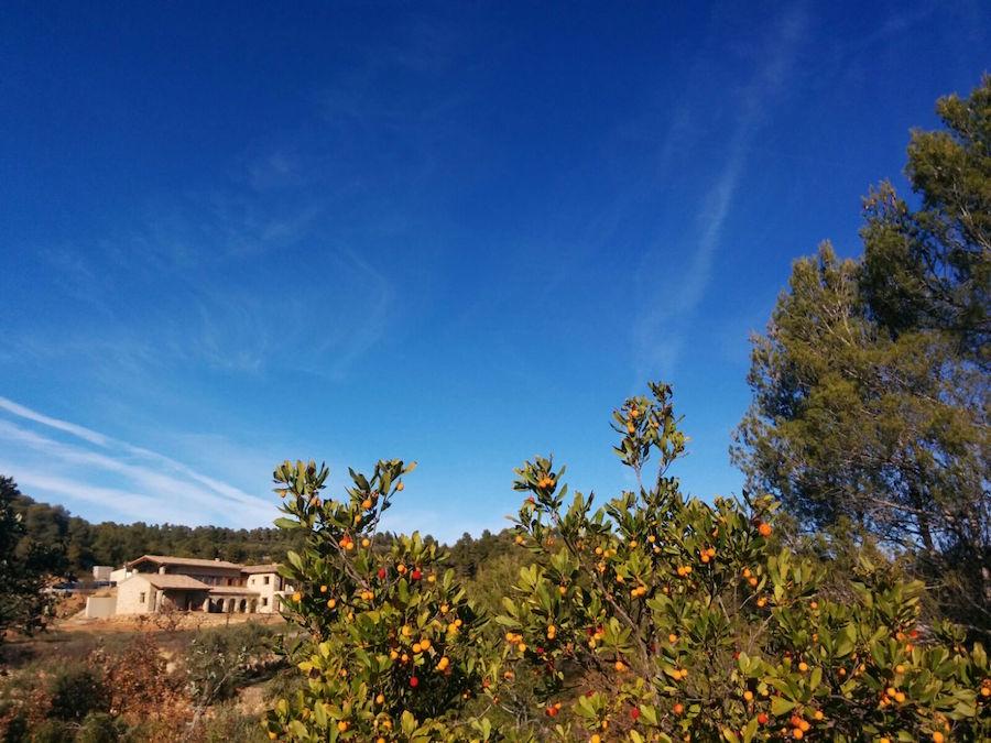 Our homestead, Mas del Encanto - seen through a bush of tree strawberries we'll soon turn into liquor.