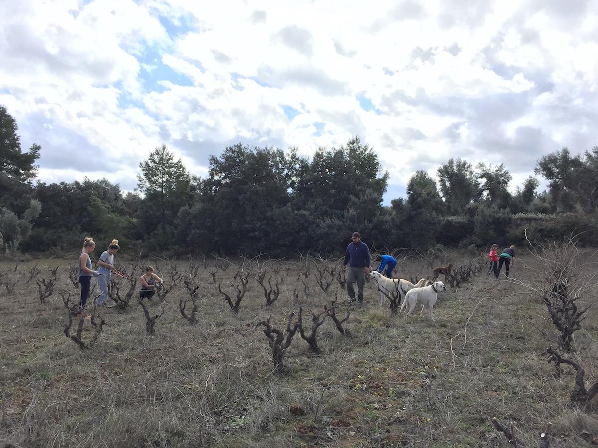 Working on friends' vineyards