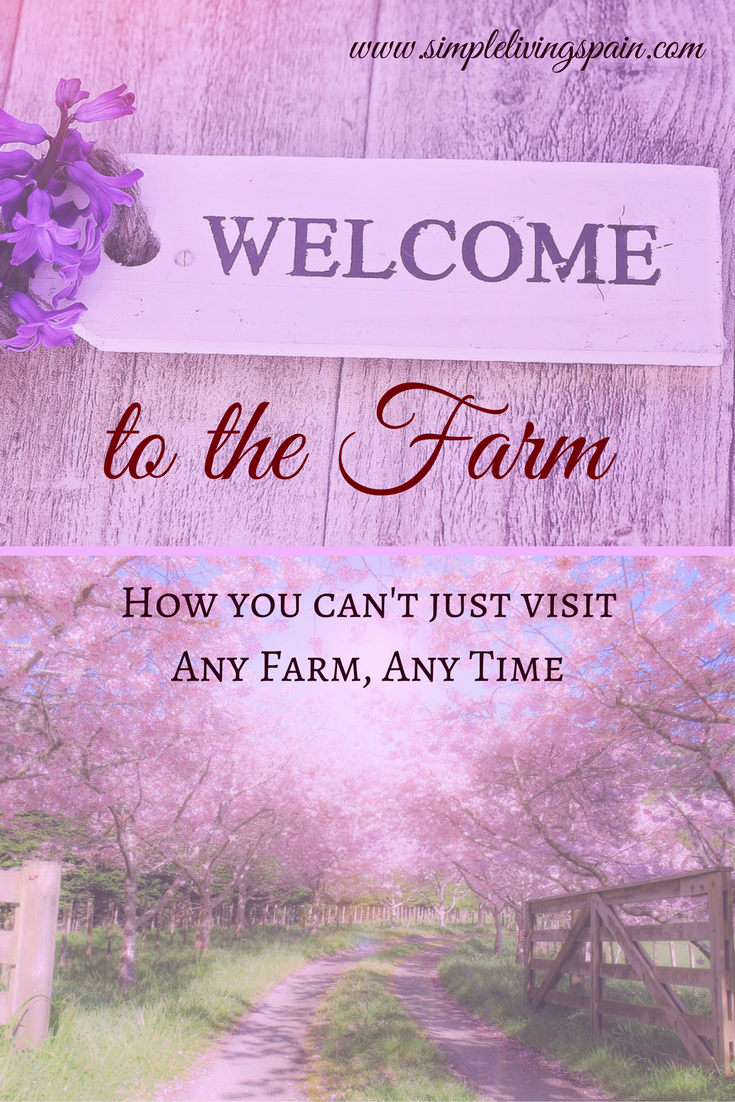 We love visitors to our farm - but we can't have people turning up on our doorstep every day. So we found a solution that works for everyone!