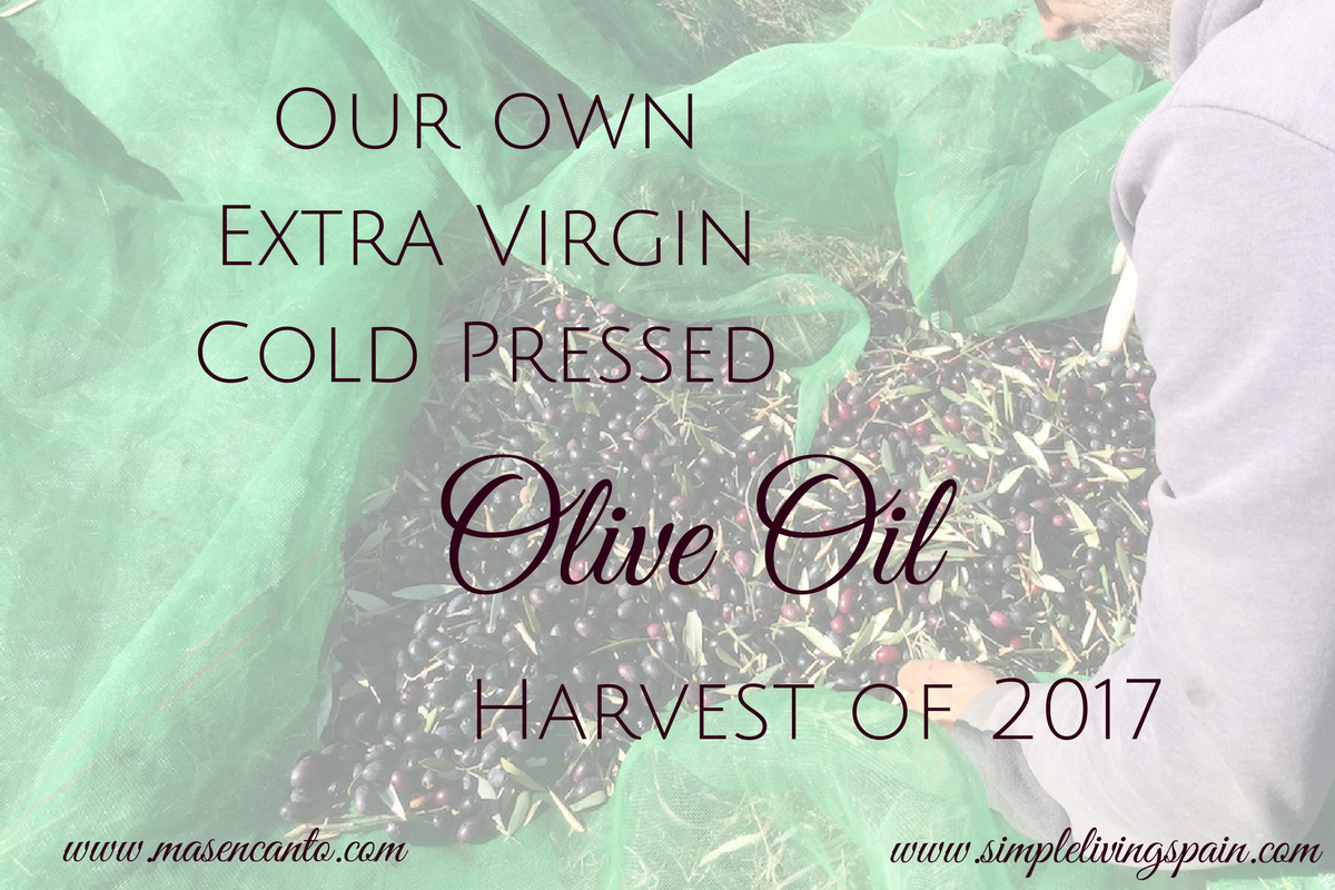 Extra virgin, cold pressed Olive oil - grown, harvested and pressed with love (and sticks and nets)