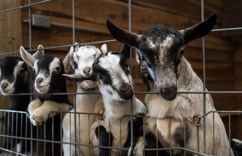 2-Kids-Goat-Farm-About-5.jpg