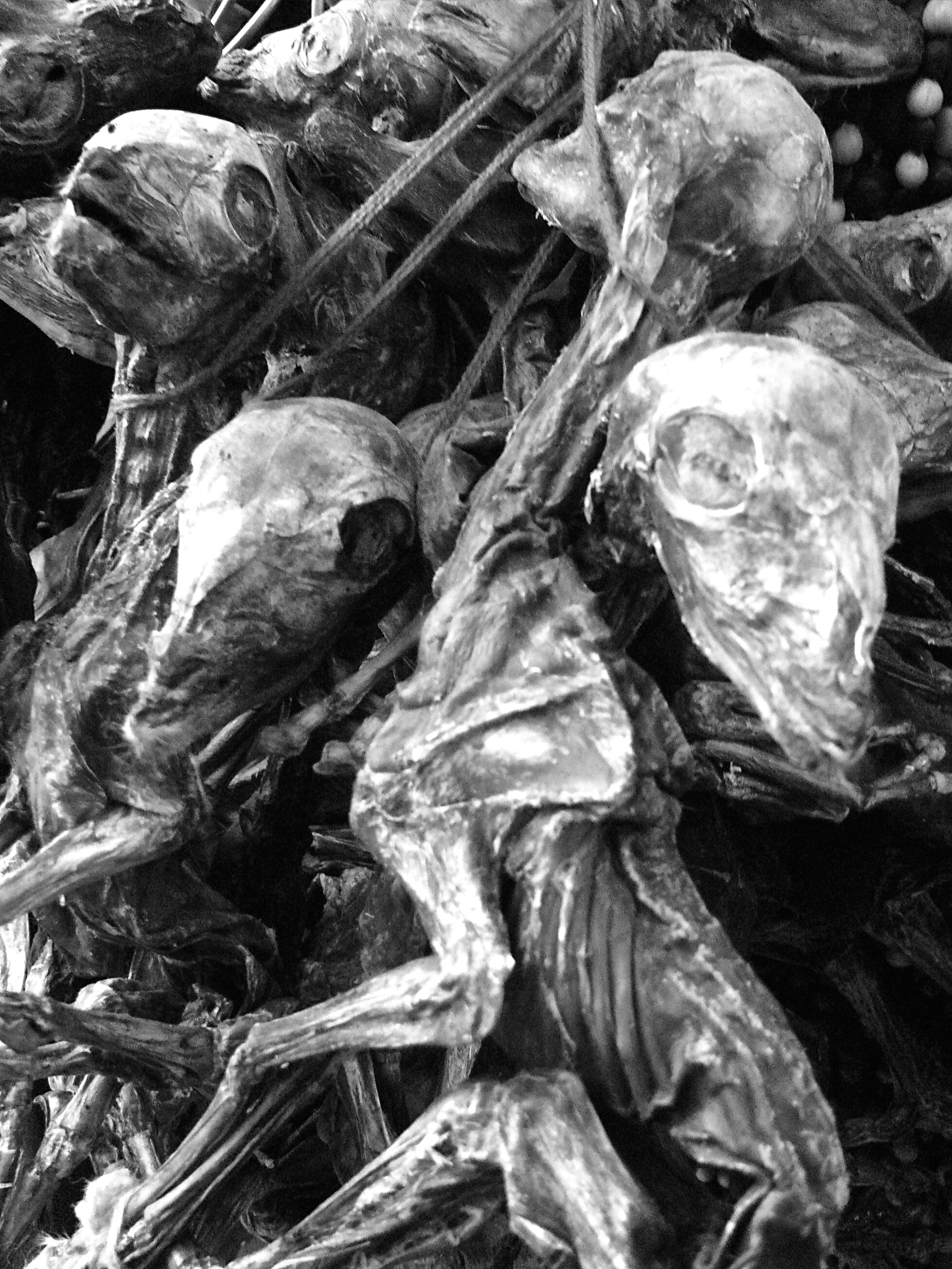 Llama Fetuses for sale in witches' market, La Paz