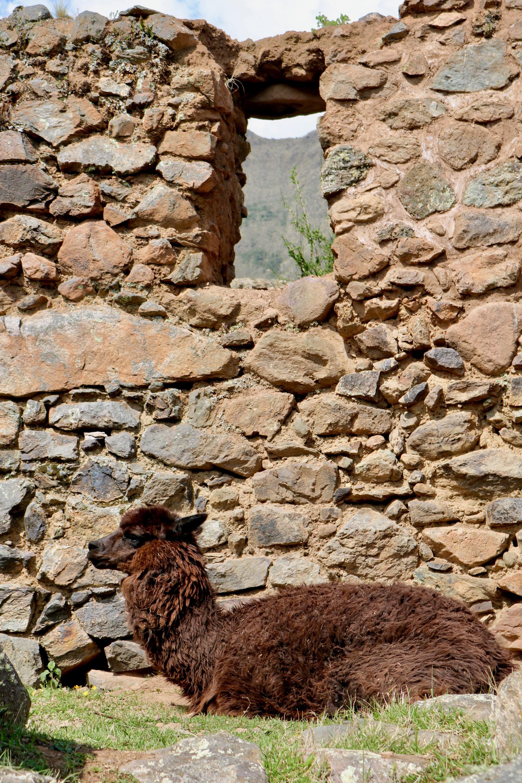 pumamarca ruins day hike - 3