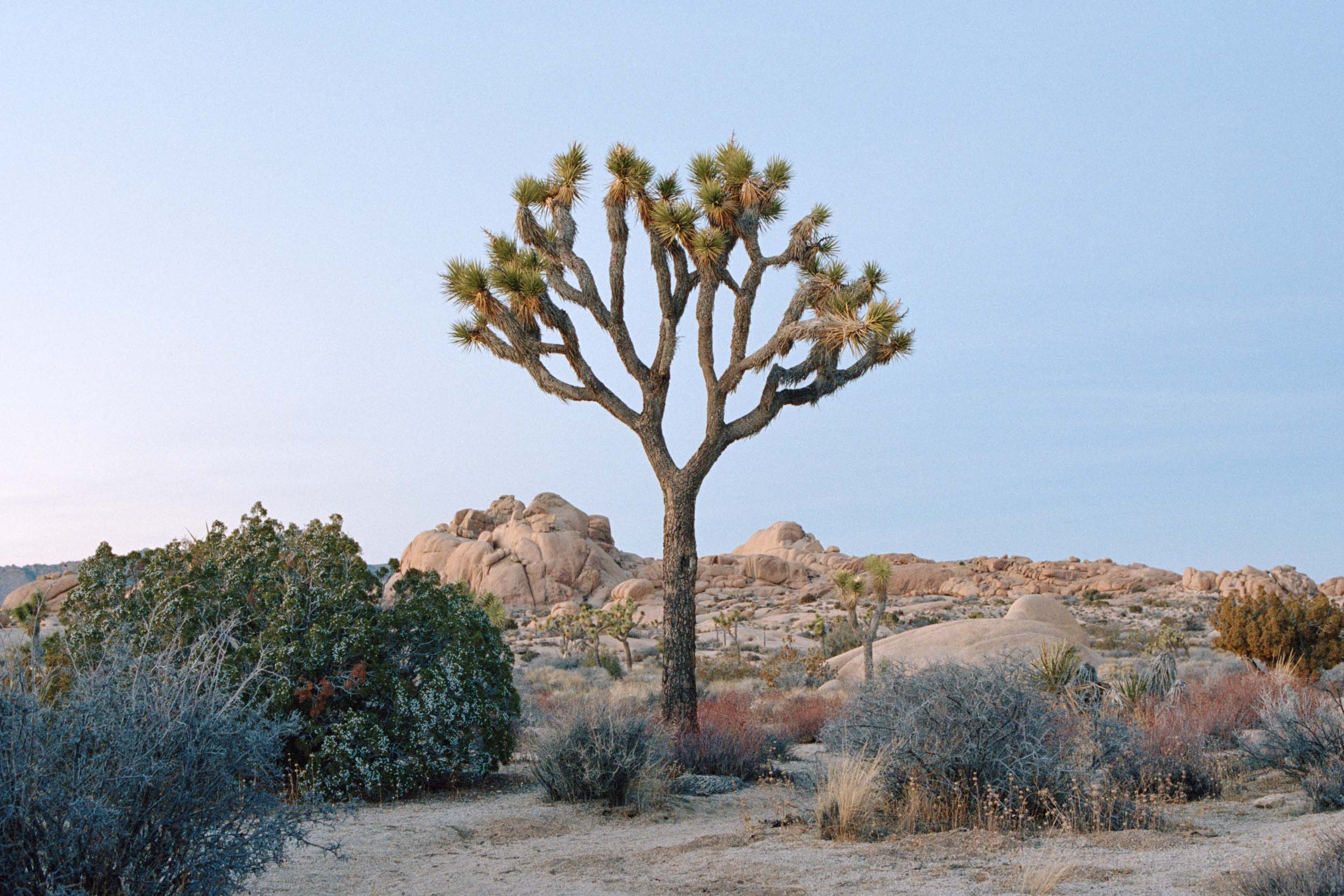 08LA 18 190007 slab city, california, scottish documentary photographer, documentary scotland, salton sea, joshua tree, freelance.jpg