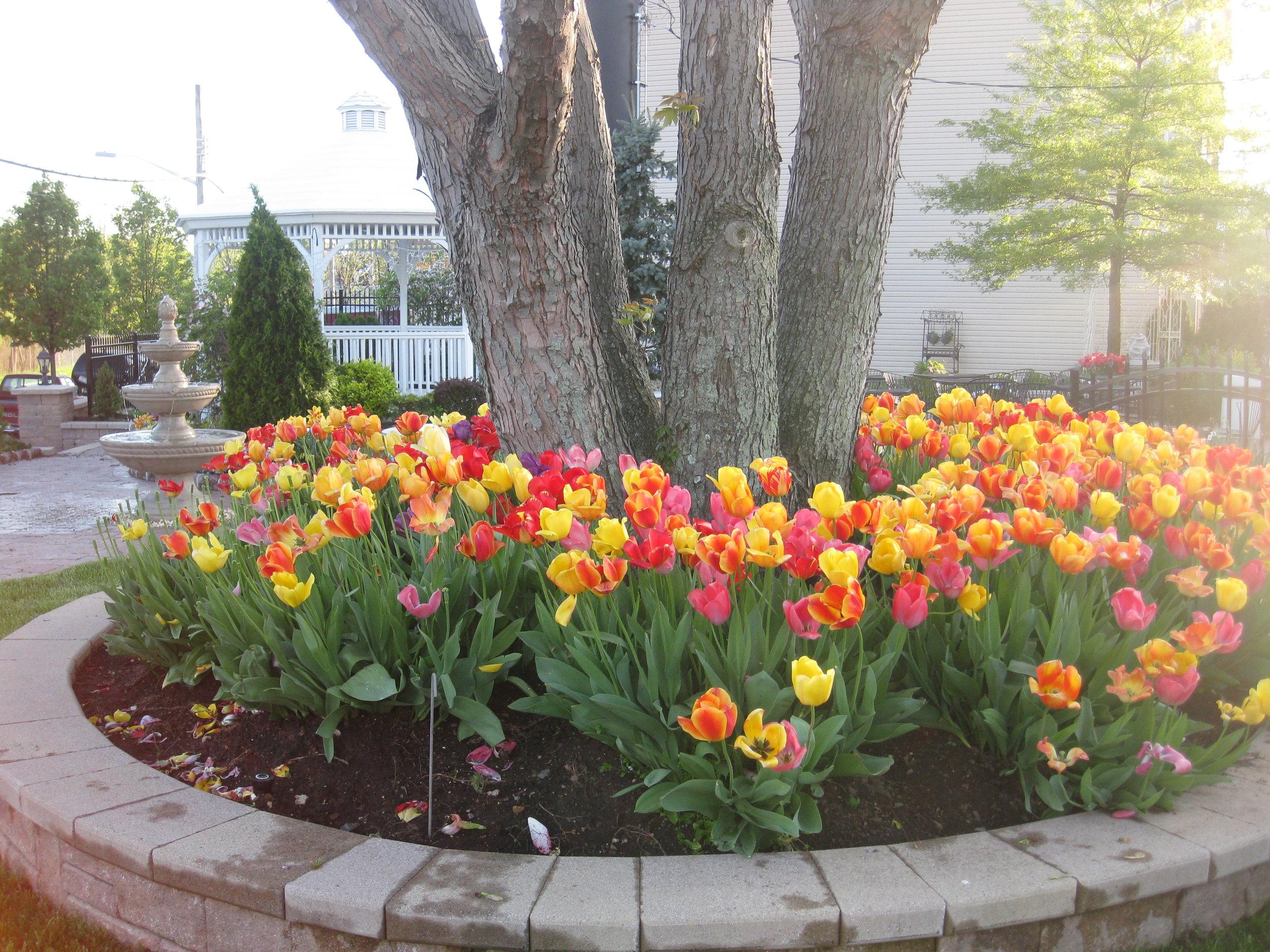 spring 2010 obi 4.jpg