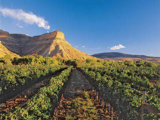 Grand-Junction-Horse-Mountain-Overlooking-Grand-Valley-vineyard-CR.jpg