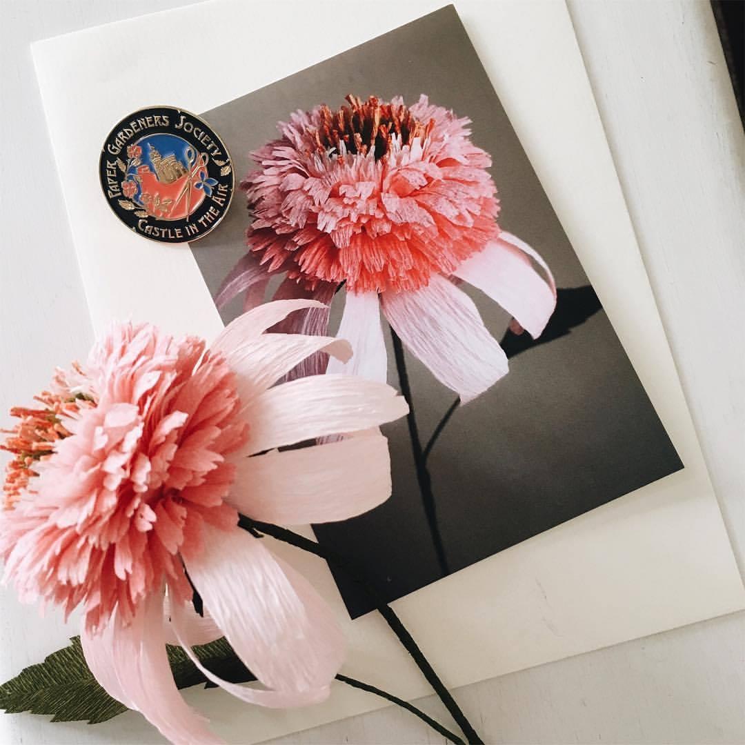Echinacea Feature.jpg