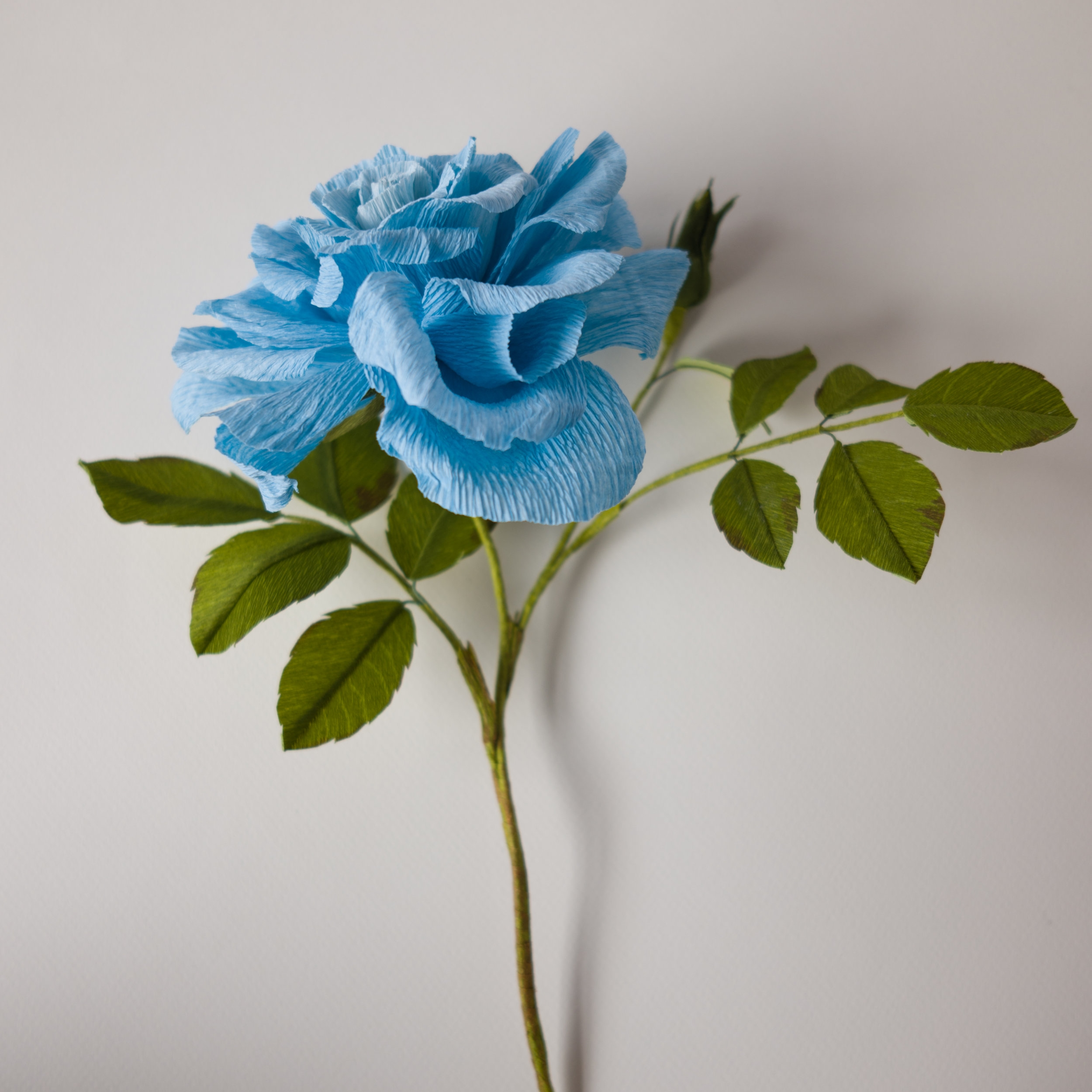 "Blue Rose  Made for ""Botanical Impossibilities"" collaborative project with Anna Chedid"