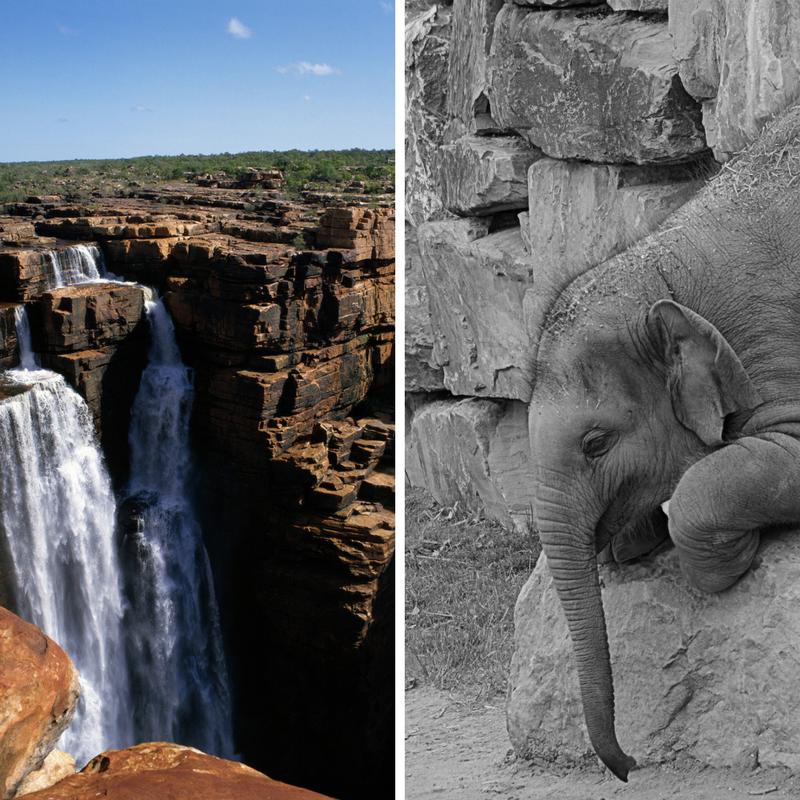 Waterfall vs. agile methodologies