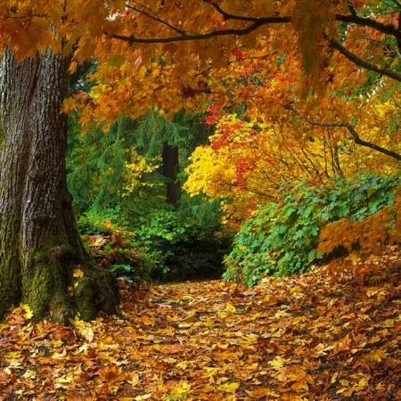 autumn-forest-wallpapers-3428.jpg