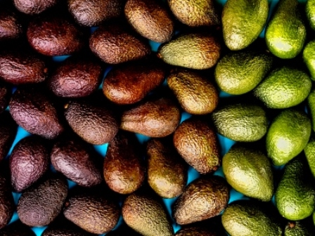 Avocado gradient