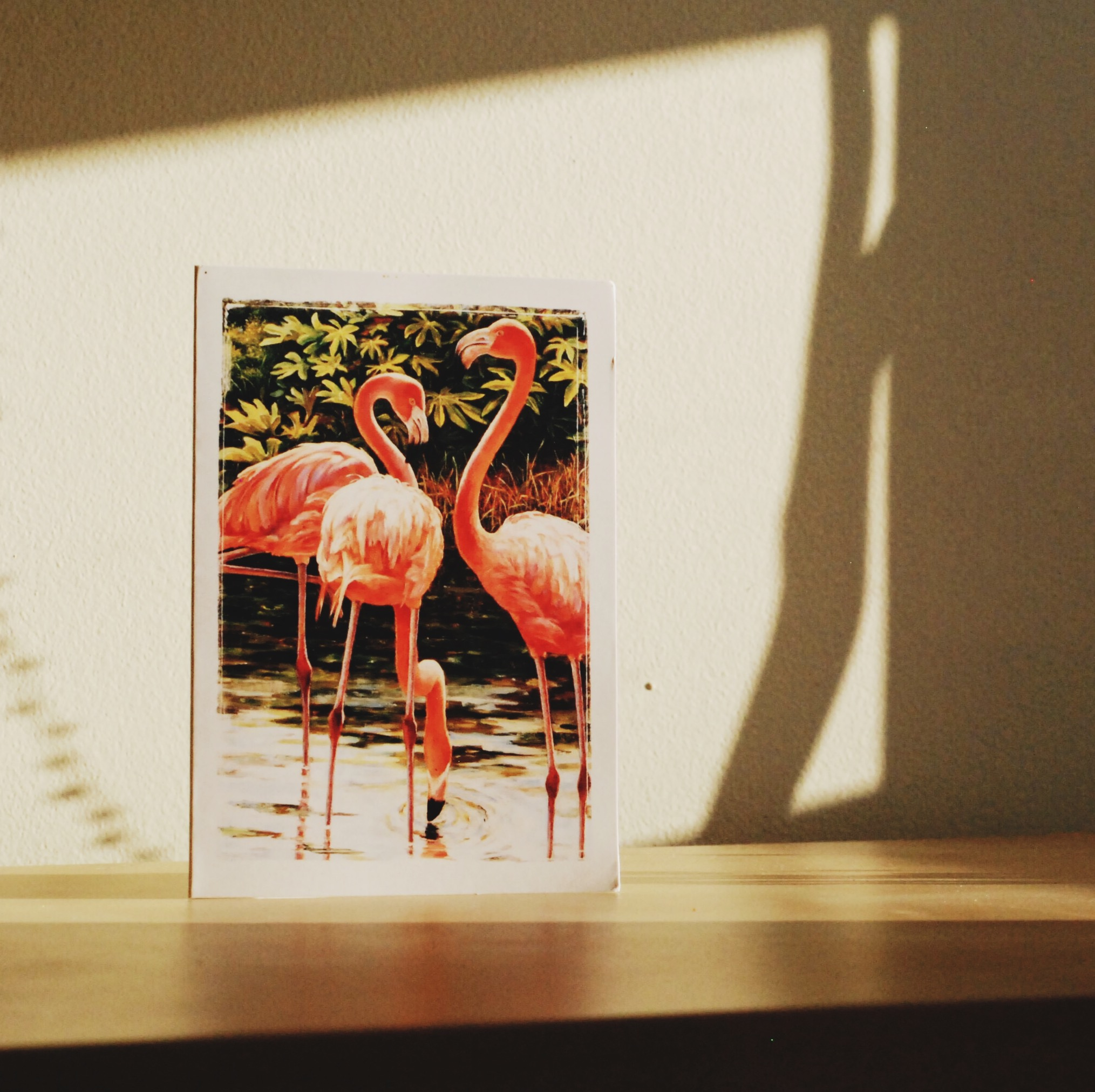 Monthly Mail Club - February 2017 flamingos