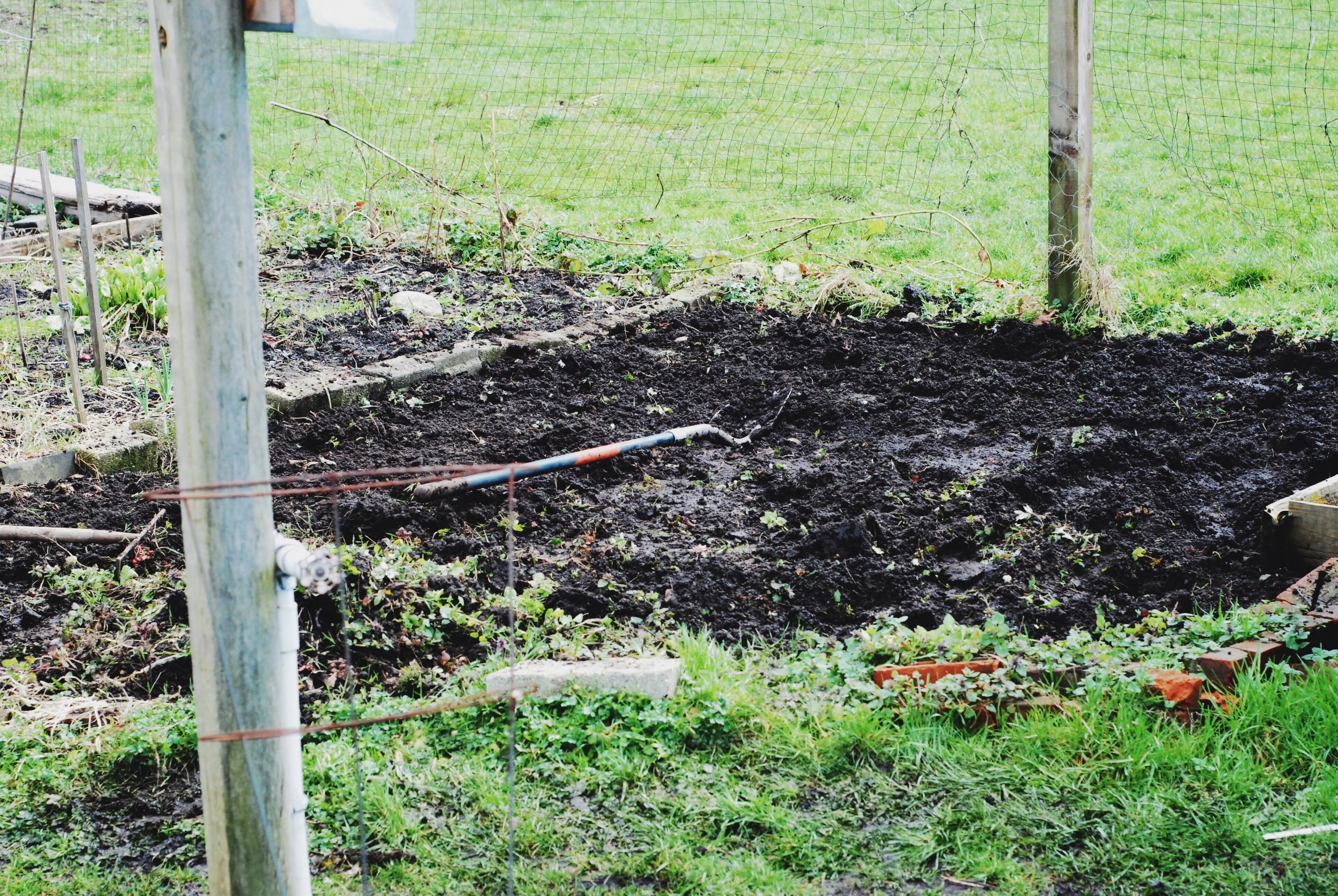 Planting our community garden