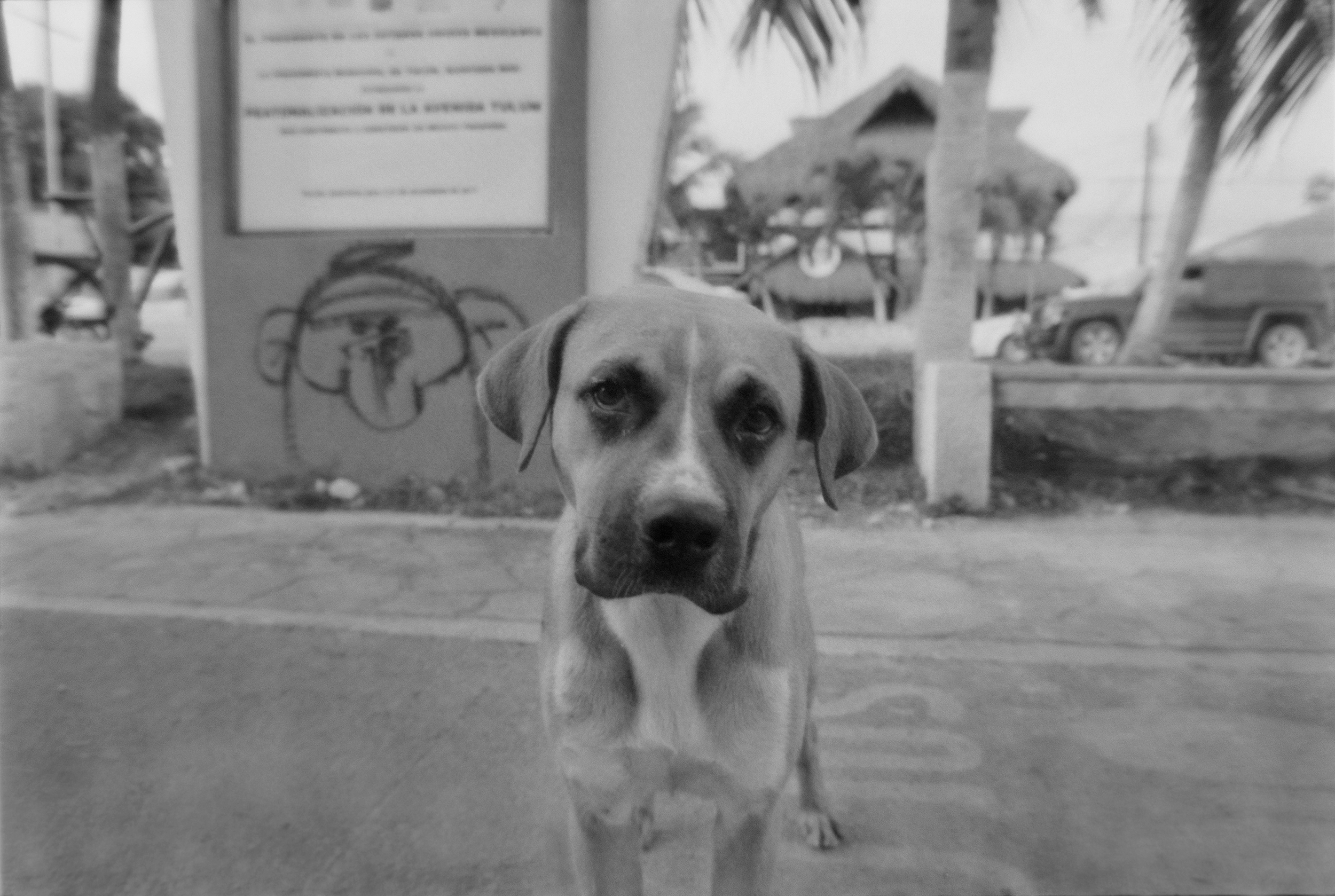 One of the many strays of Tulum