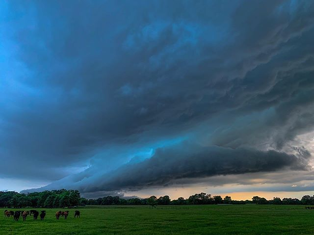 Shelf over a field... . . . . . #storms #clouds #skyporn #stormclouds #night #naturephotography #summer #art #landscapephotography #nature #rain #landscape #sunset #beach #photography #photooftheday #stormchasing #love #storm #travel #beautiful #stormchaser #sea #thunder #picoftheday #weather #lightning #cloud #sky #thunderstorm