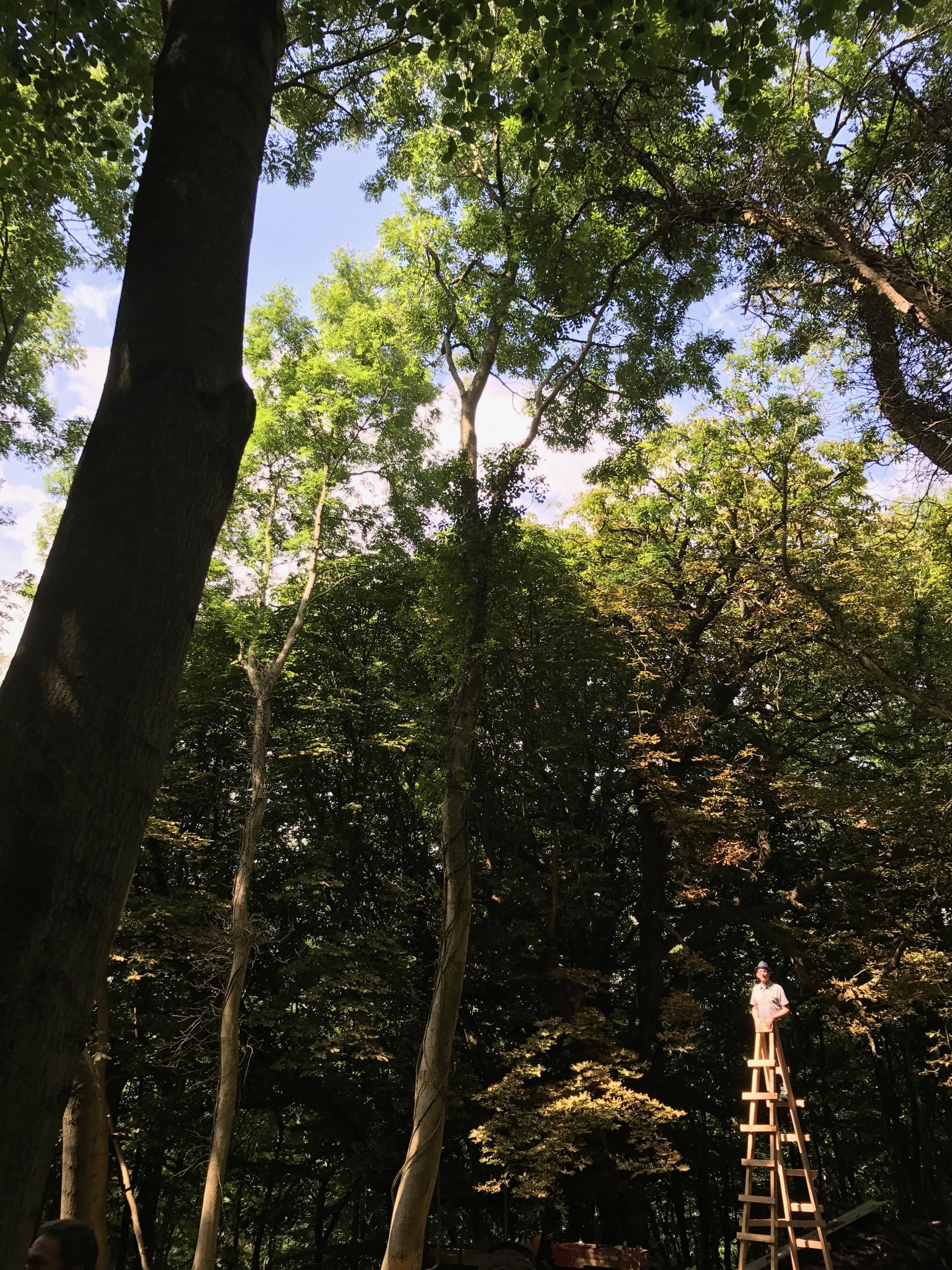 IMG_2662 - Niall McLaughlin up a ladder.jpg