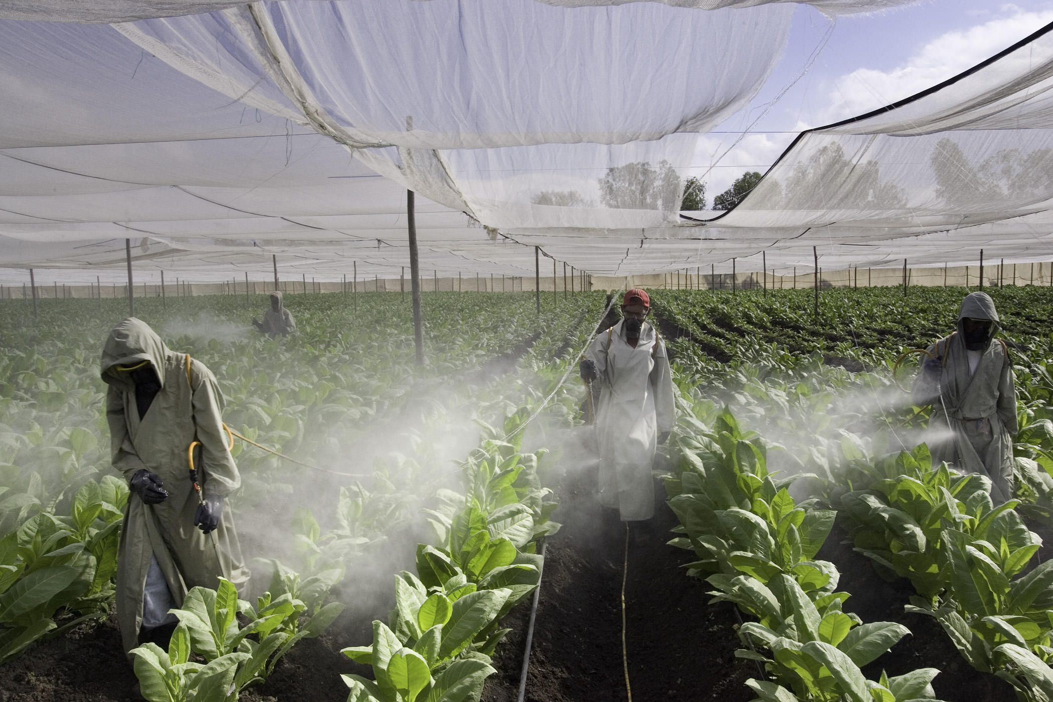 Pesticide Sprayers, Nicaragua
