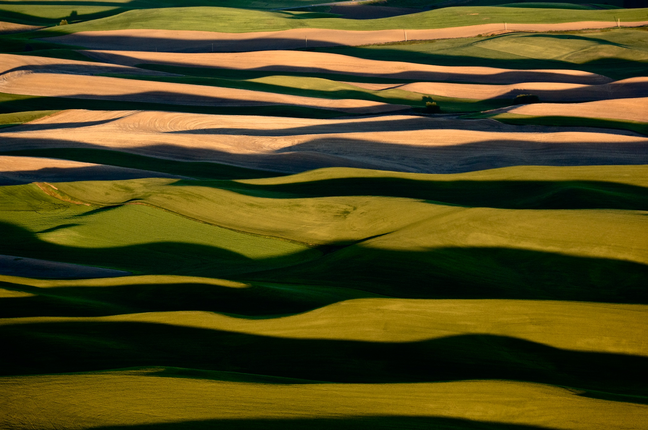 AGRICULTURAL DOMINANCE, THE PALOUSE, WASHINGTON