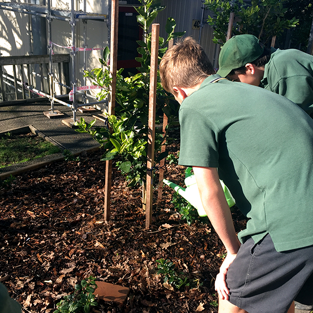 Pupil's at Murrays Bay Intermediate water their vegetable and citrus garden with rain water from the tanks supplied by the programme.