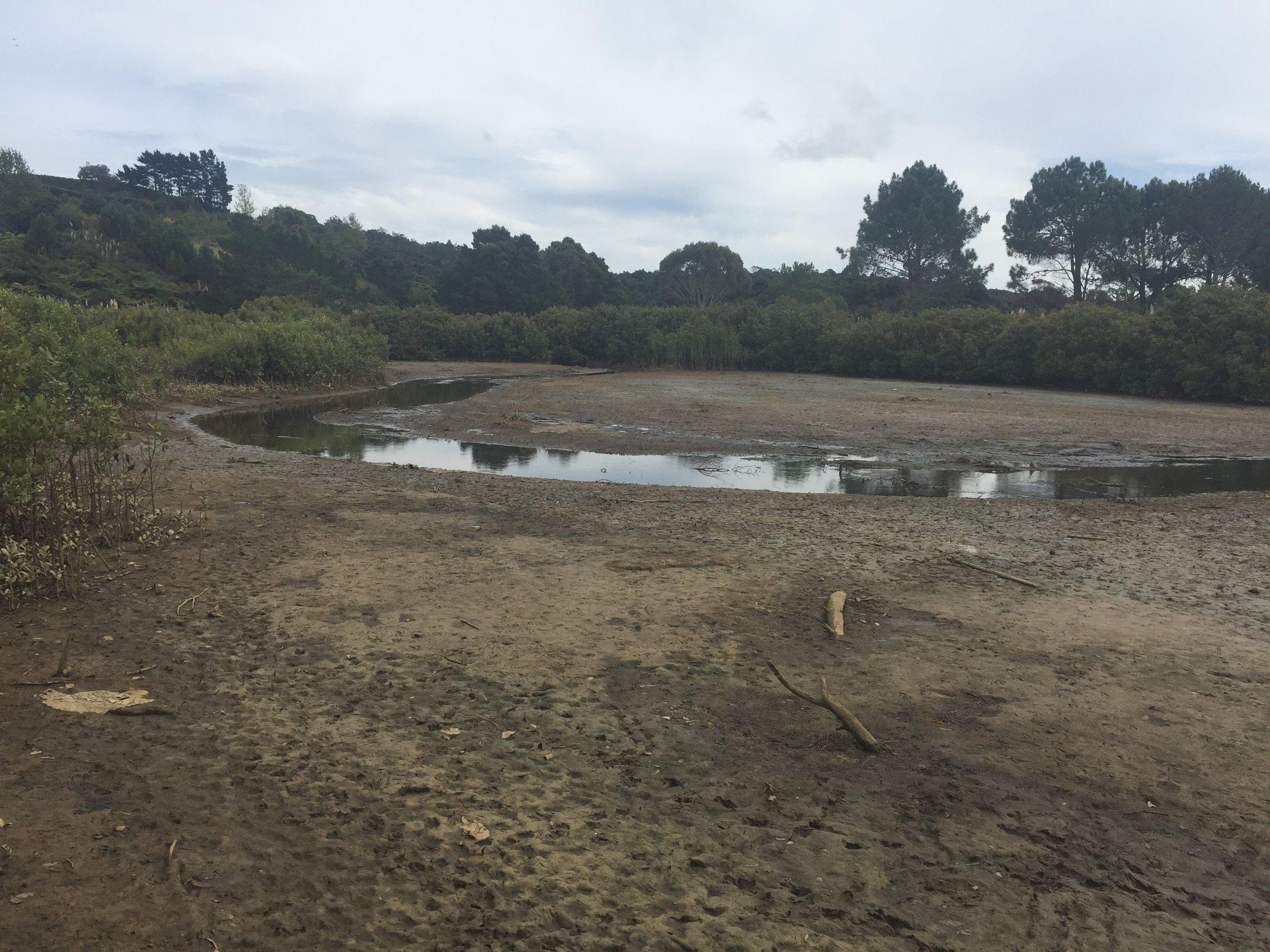 Big Bay estuarine wetland where a red seaweed is seasonally deposited with each tide.
