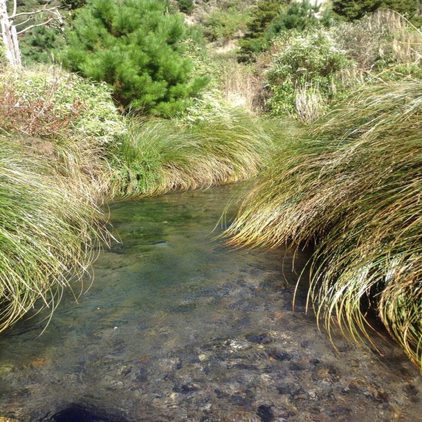 The crystal clear waters of the upstream sampling site in Orakonui Stream on Wairakei Estate.