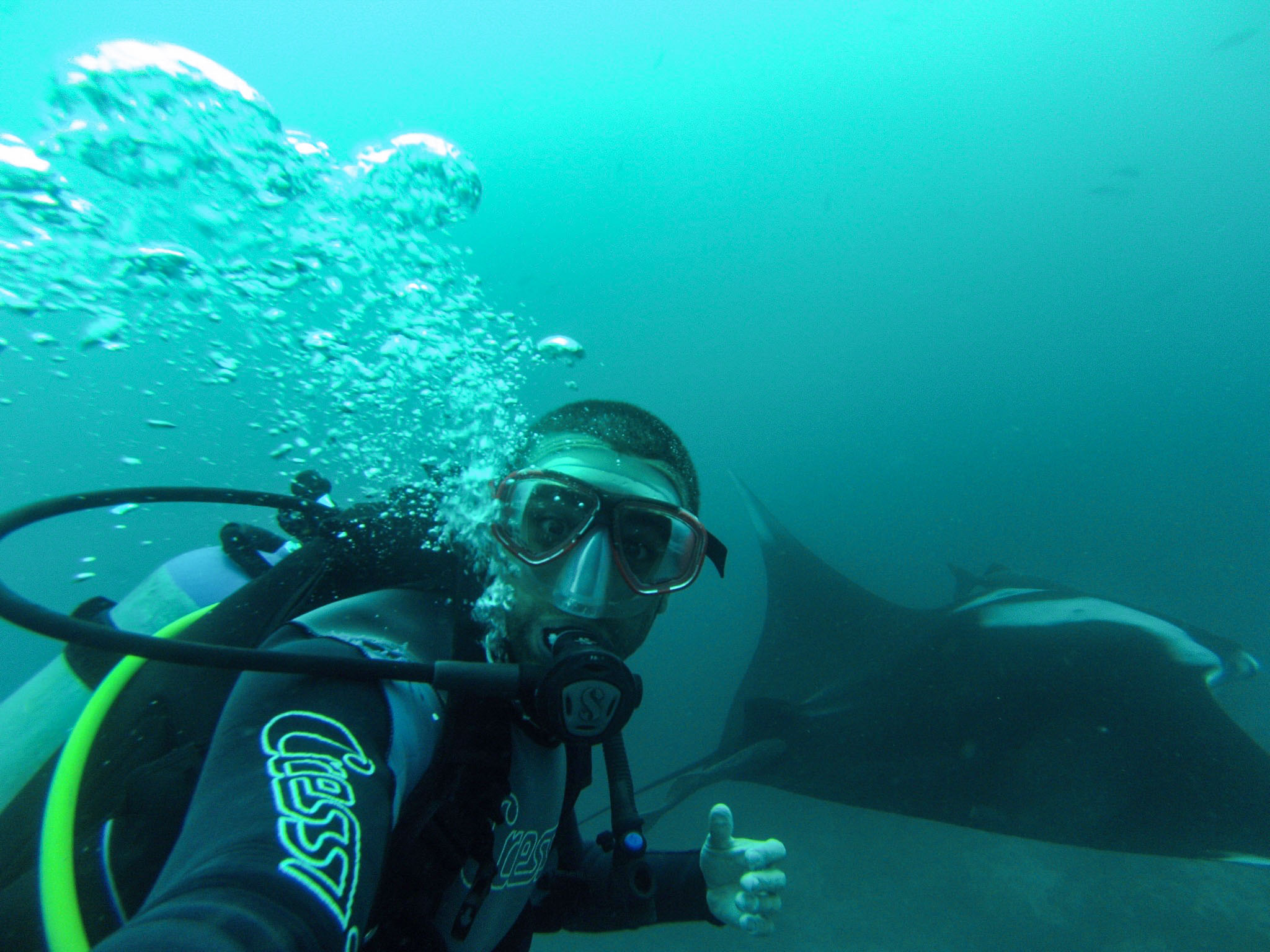Manta rays are one of the common species of rays around the Galapagos Islands, and an encounter with one on a dive is an incredible experience to have!
