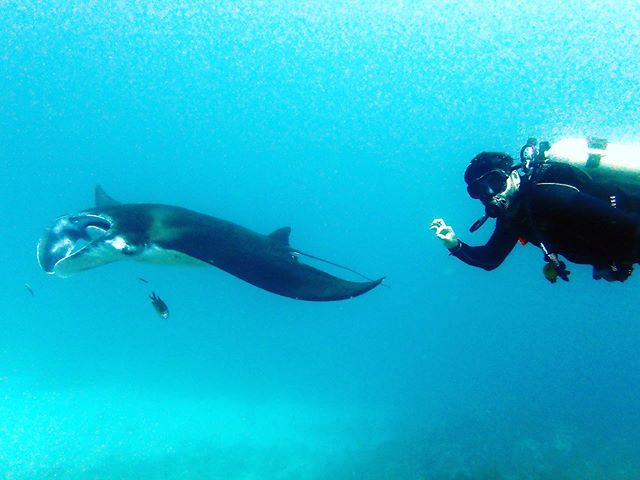 Encounter with a Manta Ray Pt.1  #scubagangsigns #deepside #datdivelyfe #diver #mantaray #bali #okdivers 📷 by @buceobali