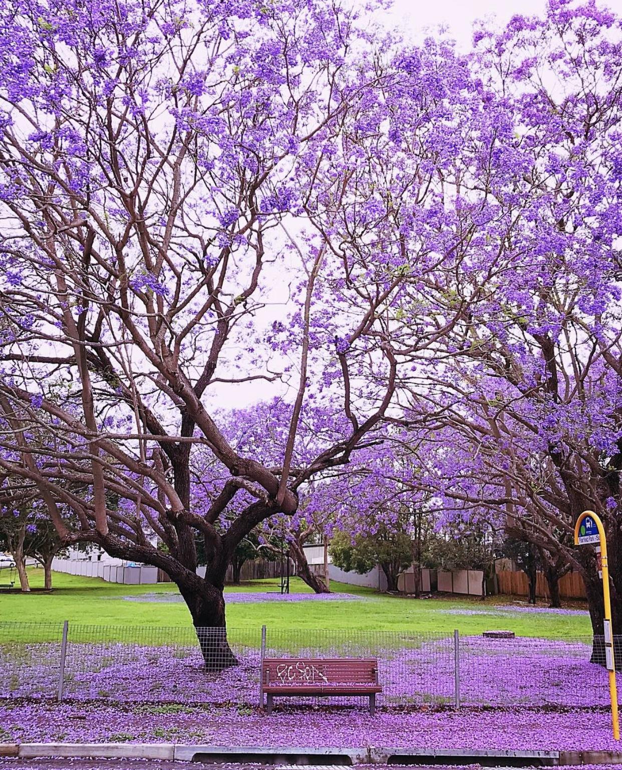 Fairfield Park, Brisbane.