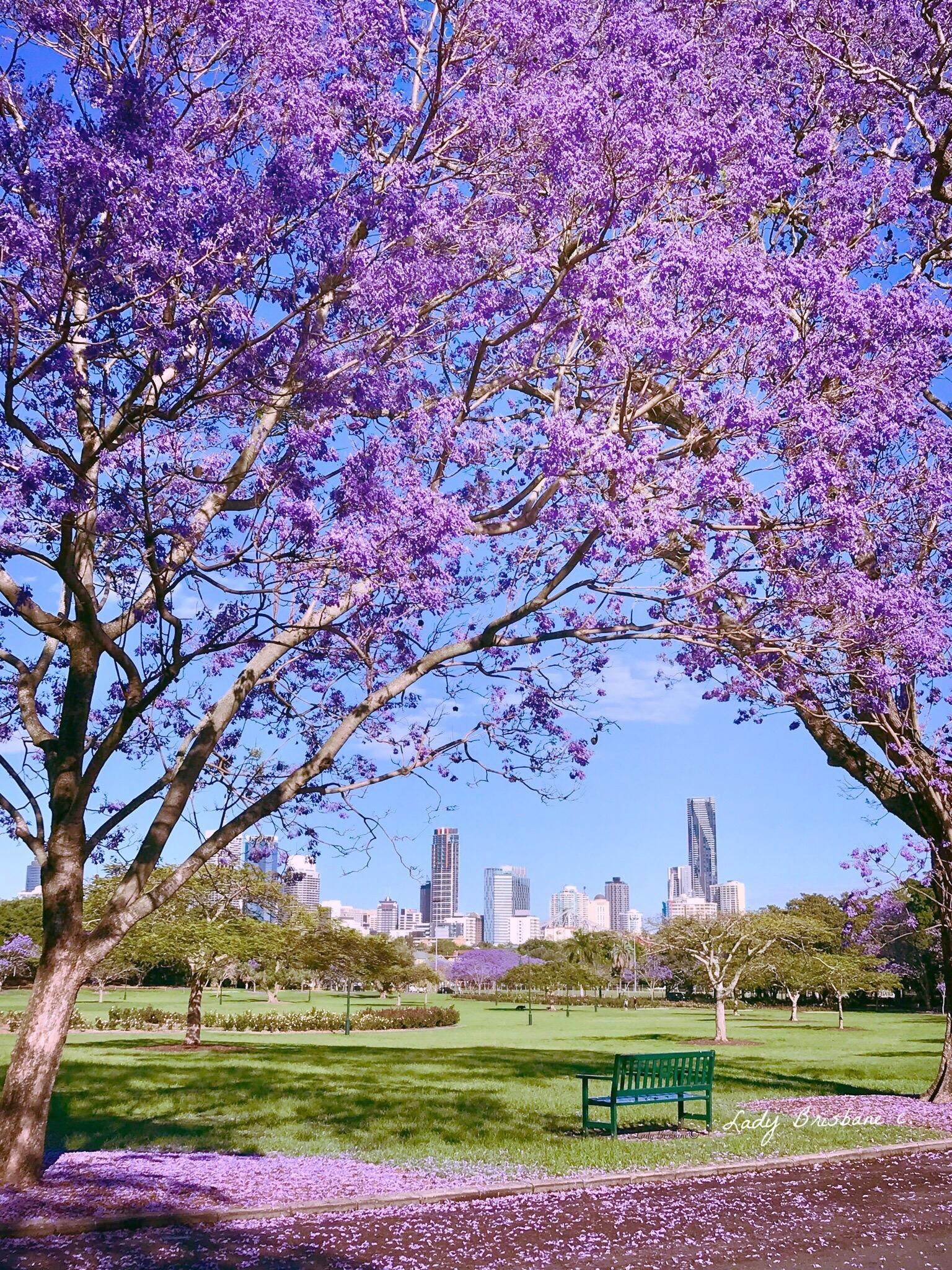 New Farm Park, Brisbane.