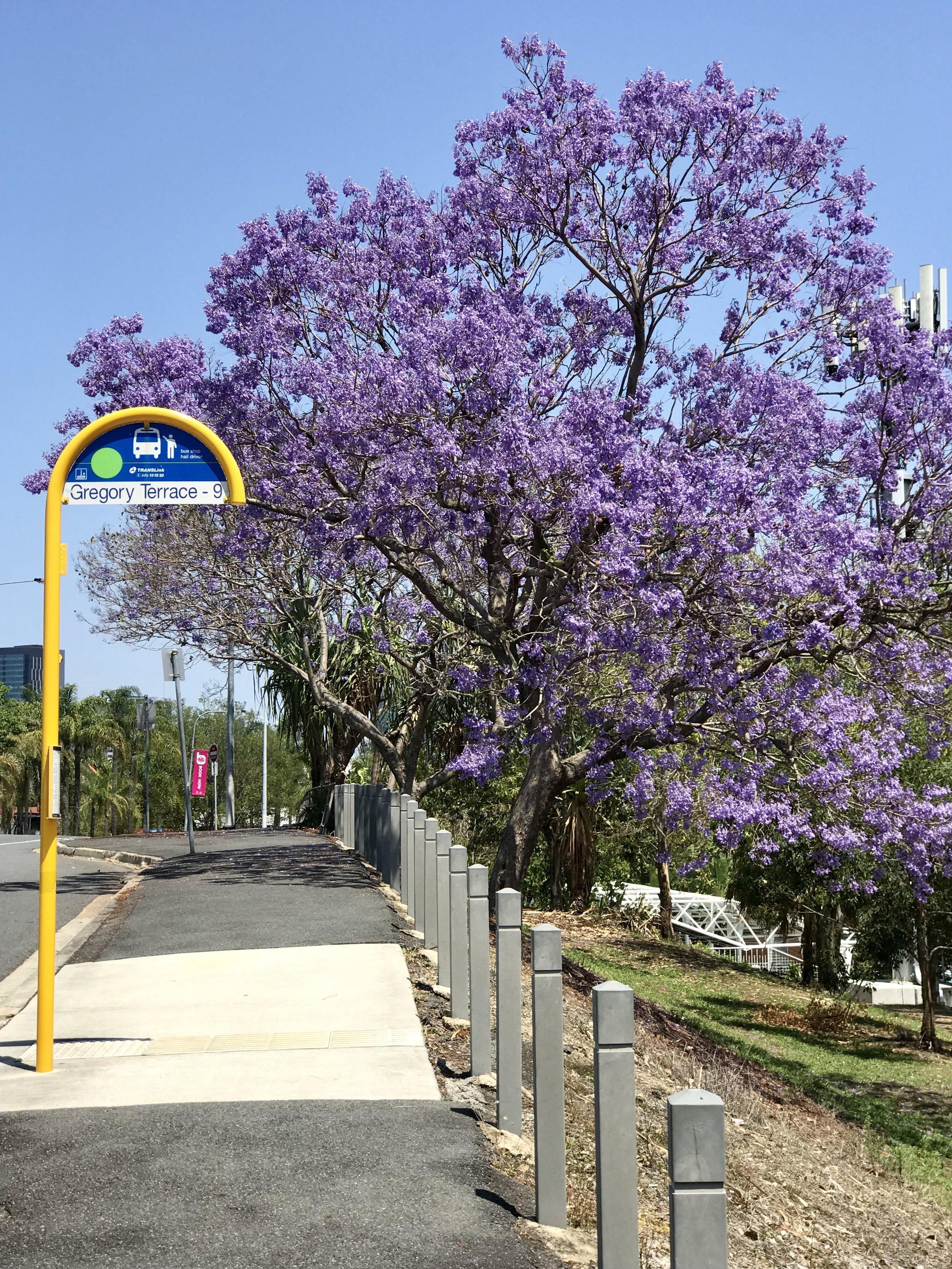 Gregory Terrace, Brisbane.