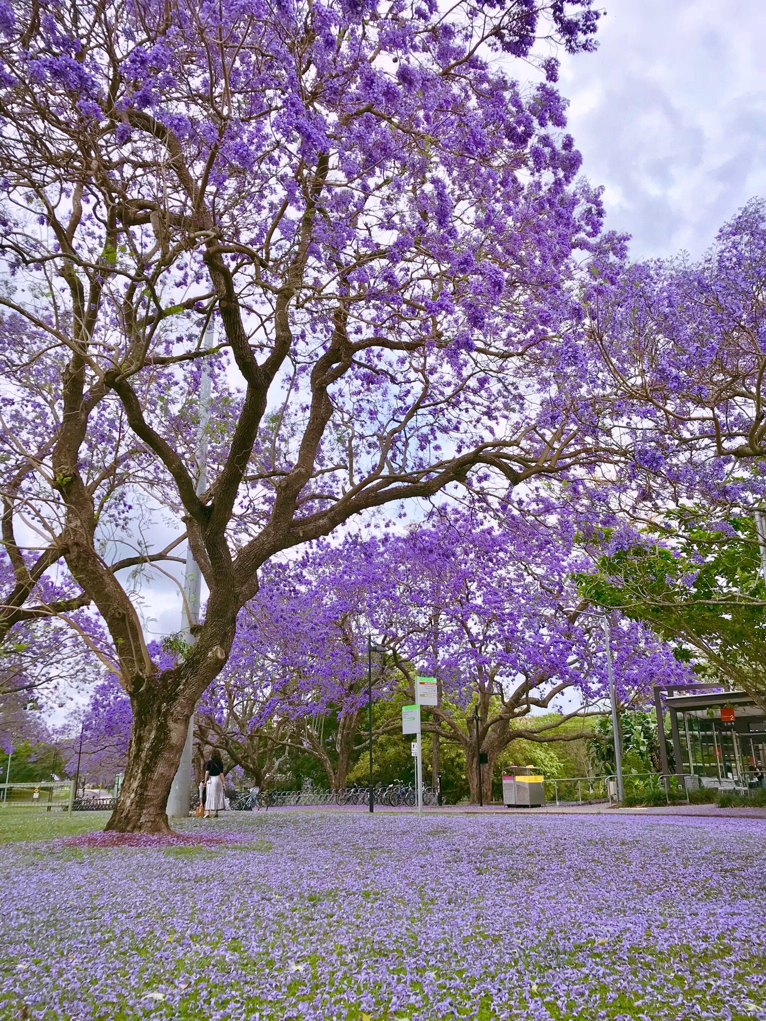 University of Queensland, St Lucia, Brisbane.