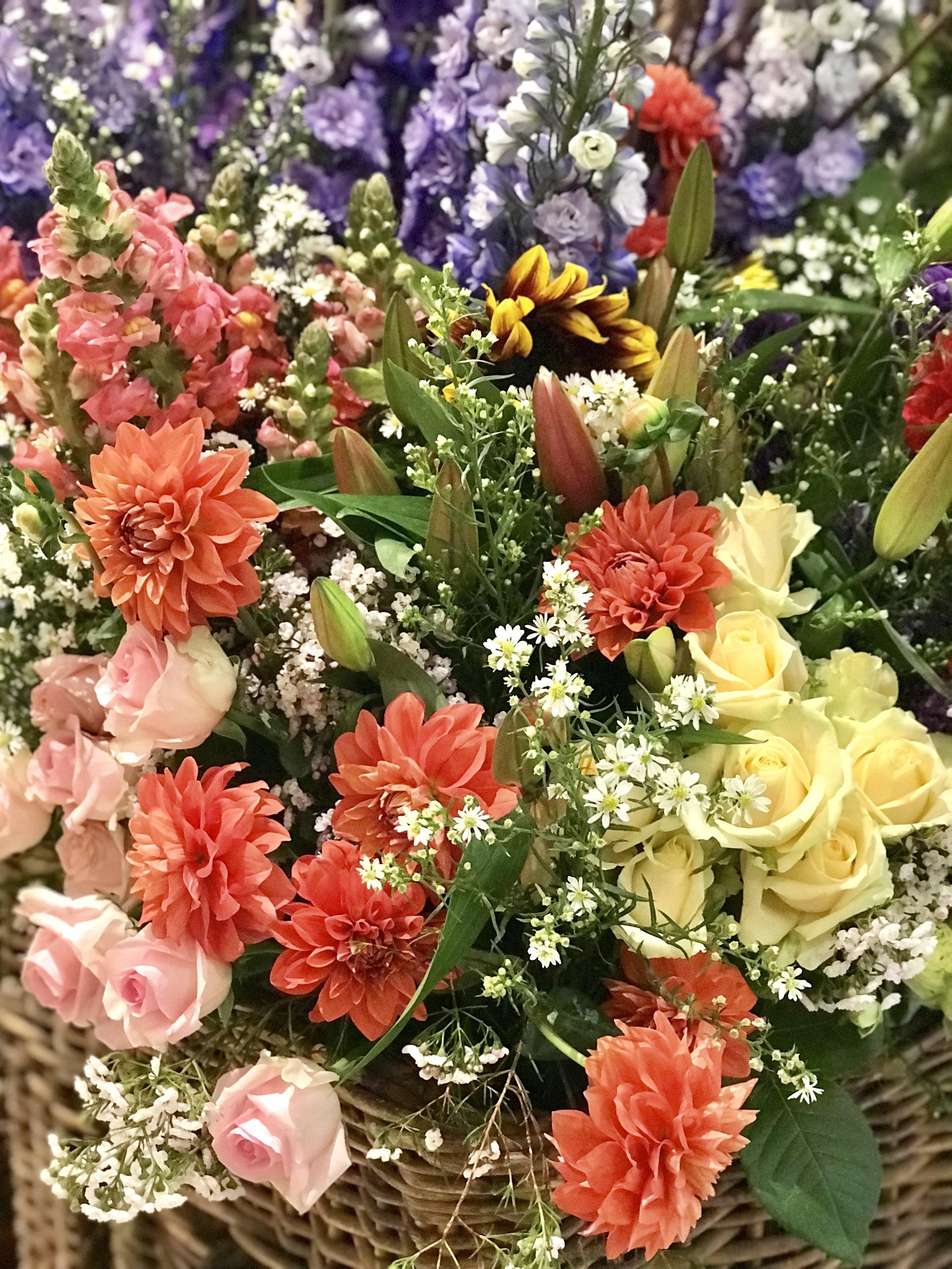 Lady Brisbane BA Spring Flower copyright