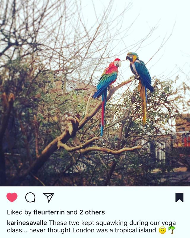 Thank you to @karinesavalle who captured the two parrots keeping an eye on the yoga class today! #yogastudio39 #brookgreenyoga #brookgreen #theworkingyogini