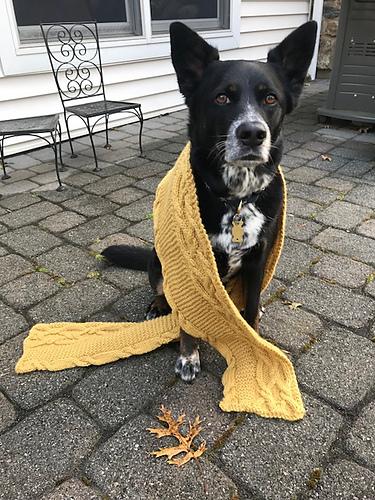 Kyle's ( haliankcb ) dog is a very obliging model!