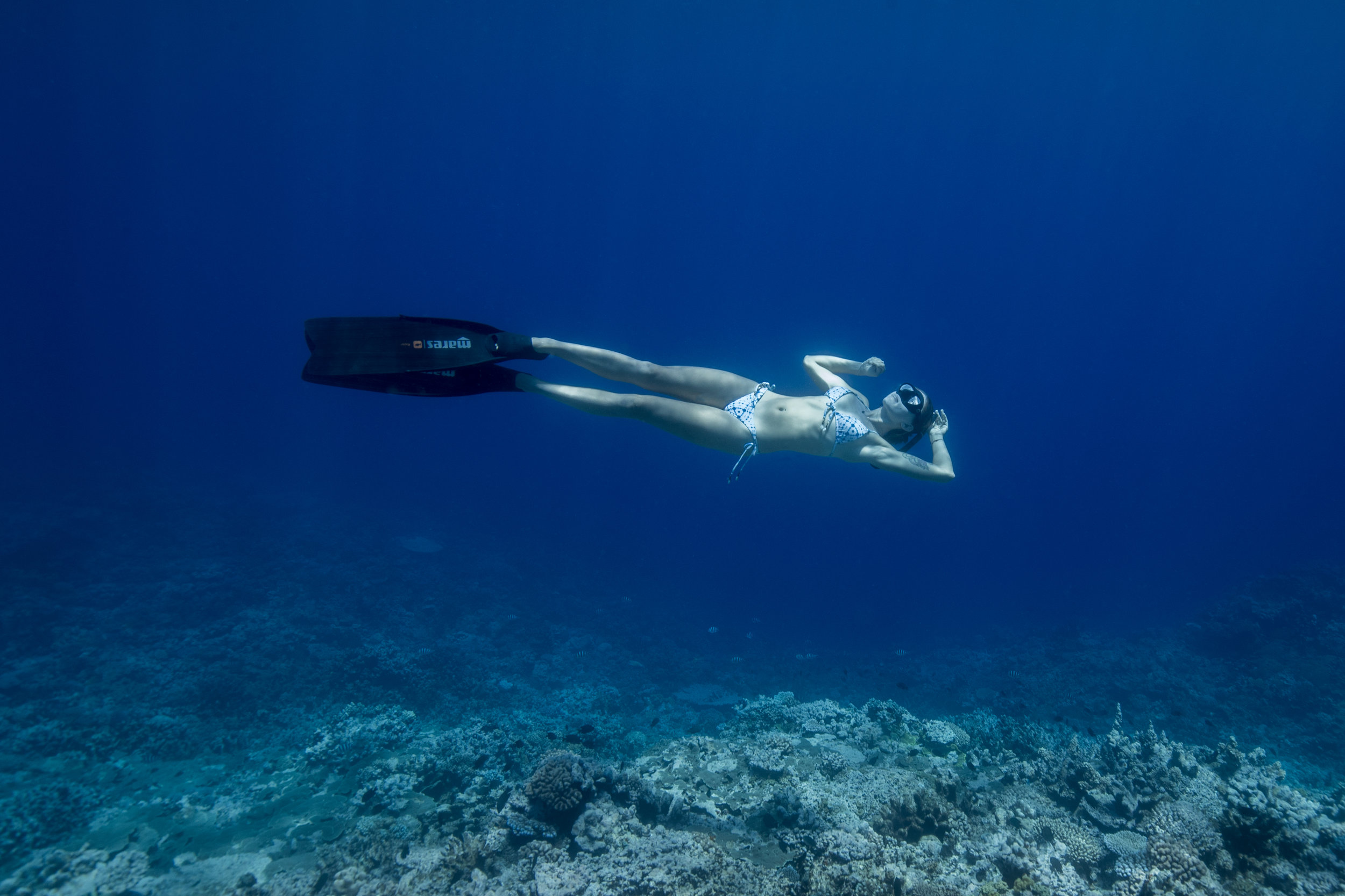 byron bay freediving.jpg