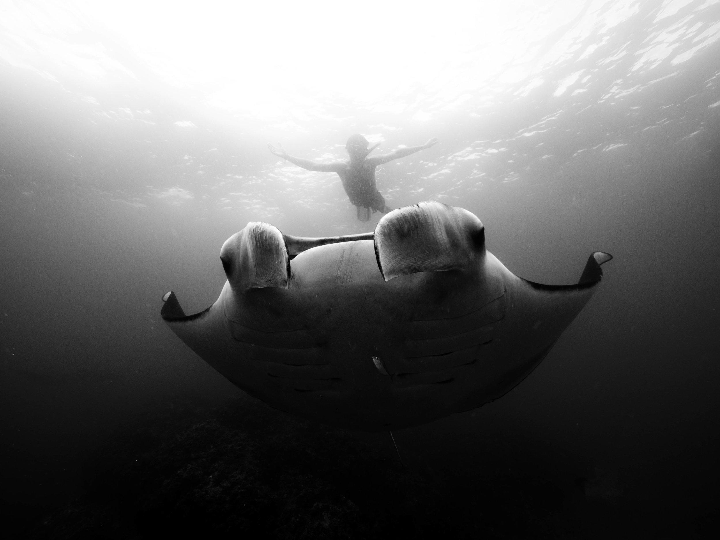 freediver with manta ray byron getdown.jpg