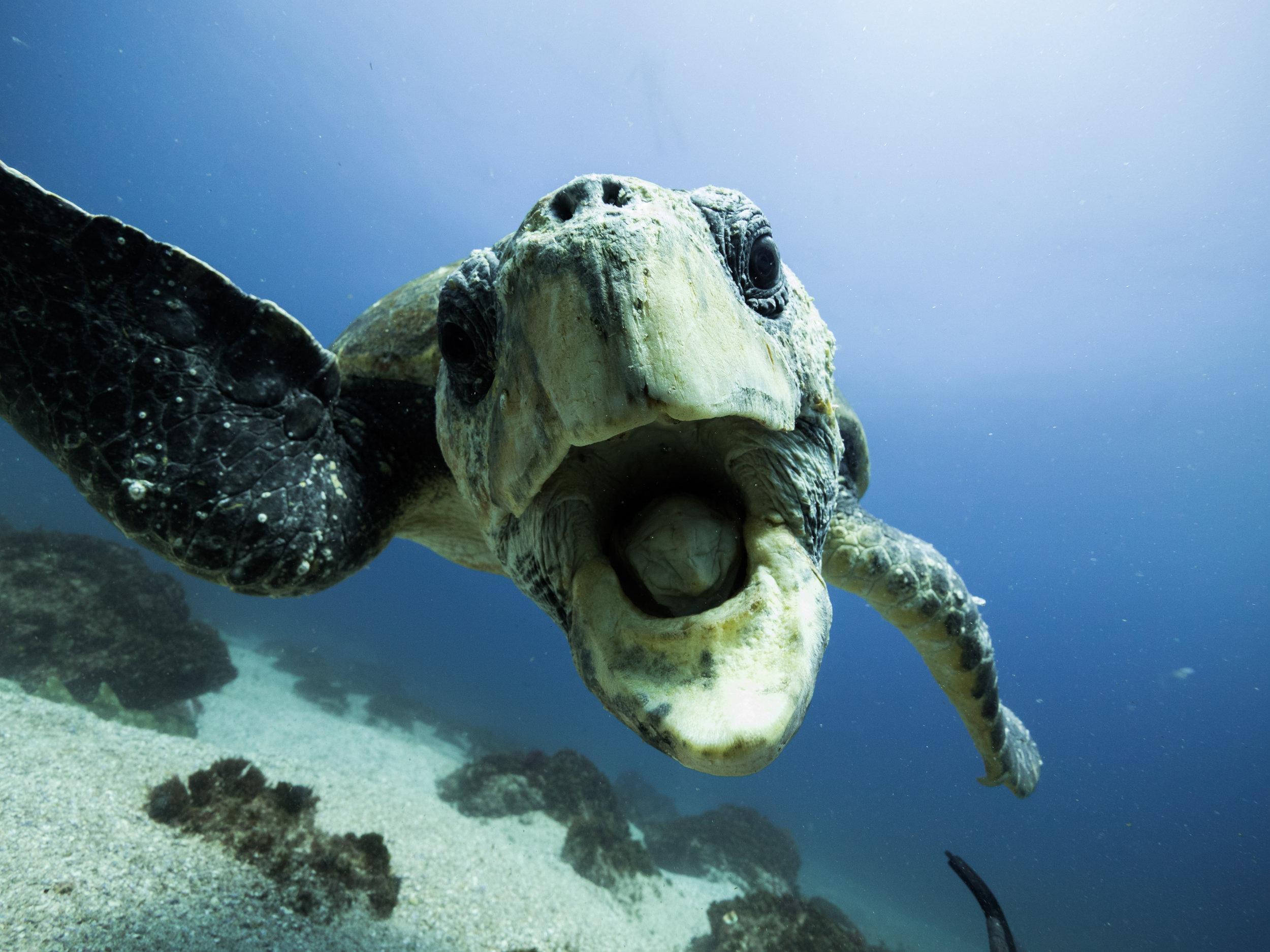 turtle byron getdown freediving.jpg